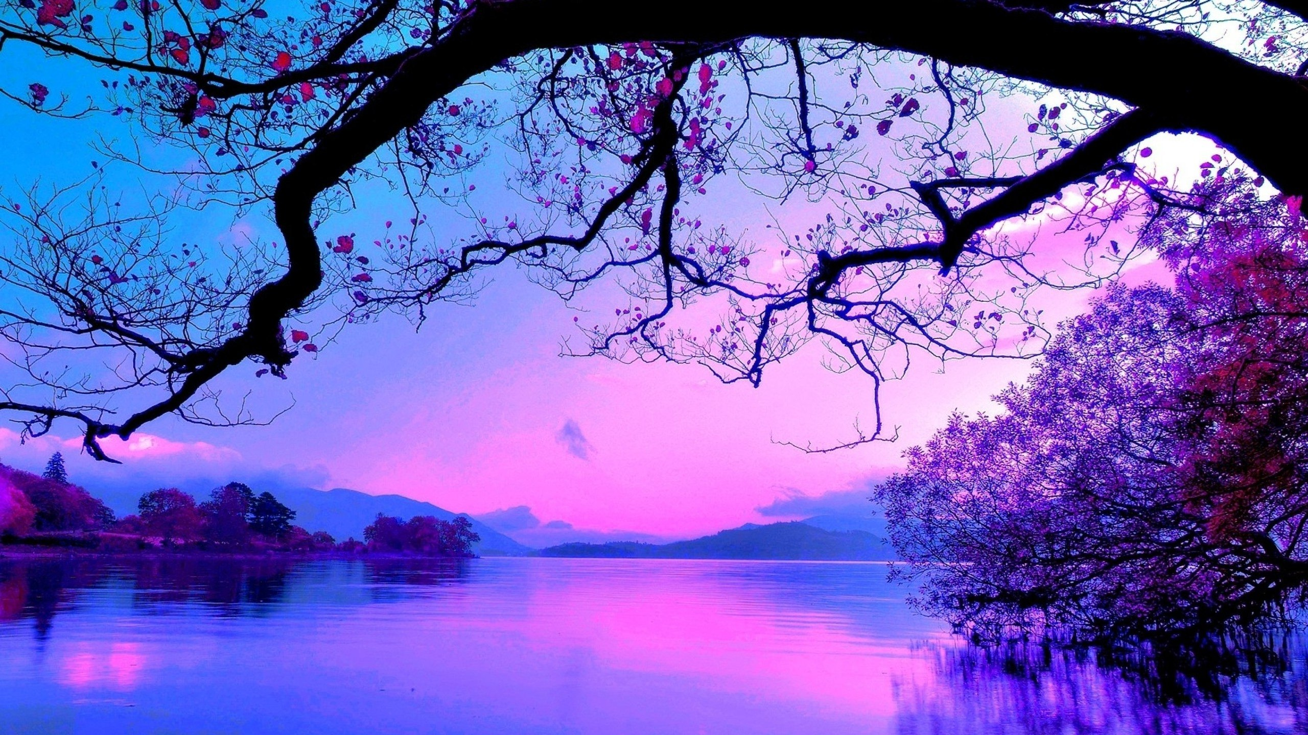 Blue And Purple Sunset 2560x1440 Wallpaper Teahub Io