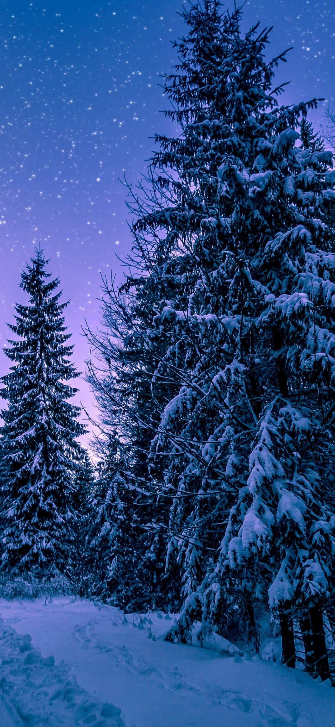 Forest Trees Night Winter Wallpaper Iphone 11 Wallpaper 4k 1125x2436 Wallpaper Teahub Io