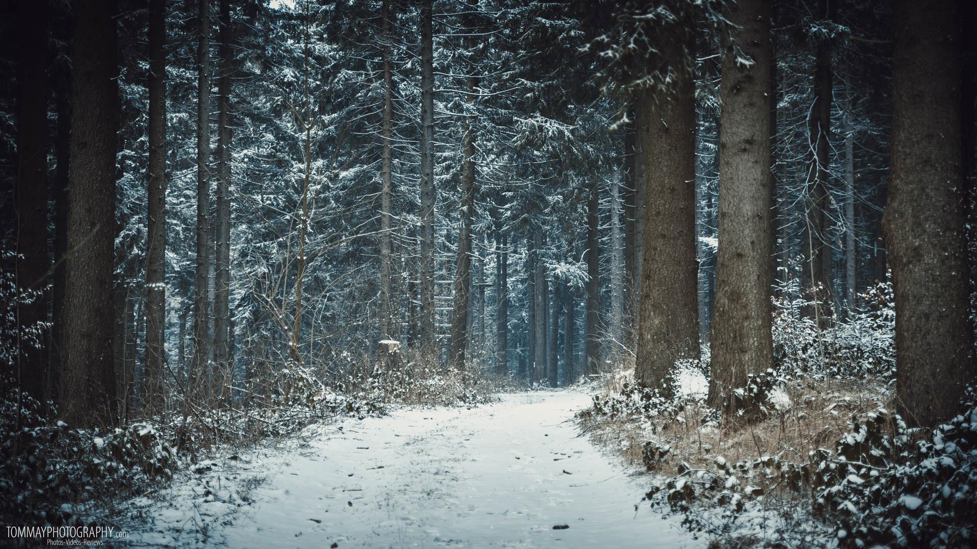 1920x1080, Winter Forest - High Resolution Winter Forest - HD Wallpaper