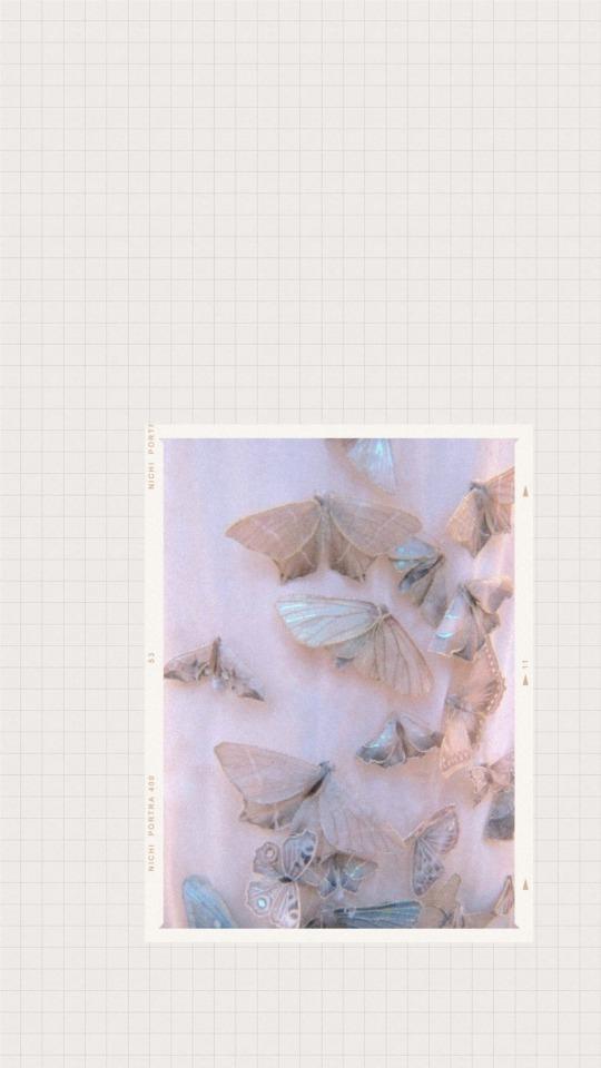 Butterfly Iphone Wallpaper Aesthetic 540x960 Wallpaper Teahub Io