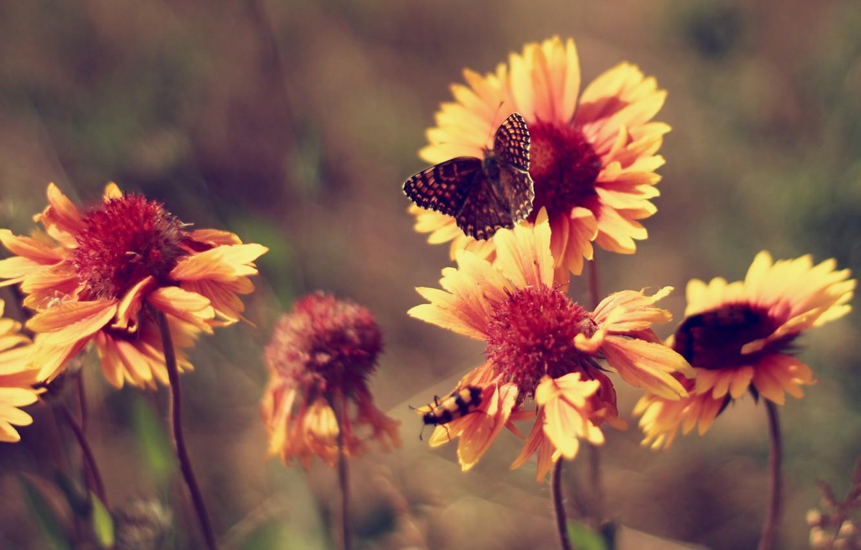 Photo Wallpaper Summer, Butterfly, Heat, Flowers, Marigolds, - Vintage Butterfly Wallpaper Desktop - HD Wallpaper