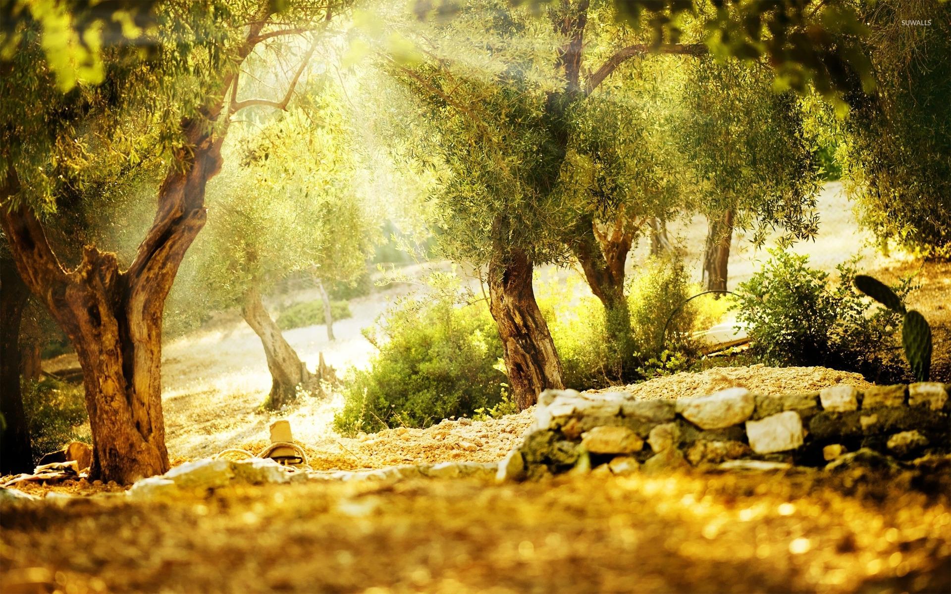 Nature Background Images Photoshop 1920x1200 Wallpaper Teahub Io