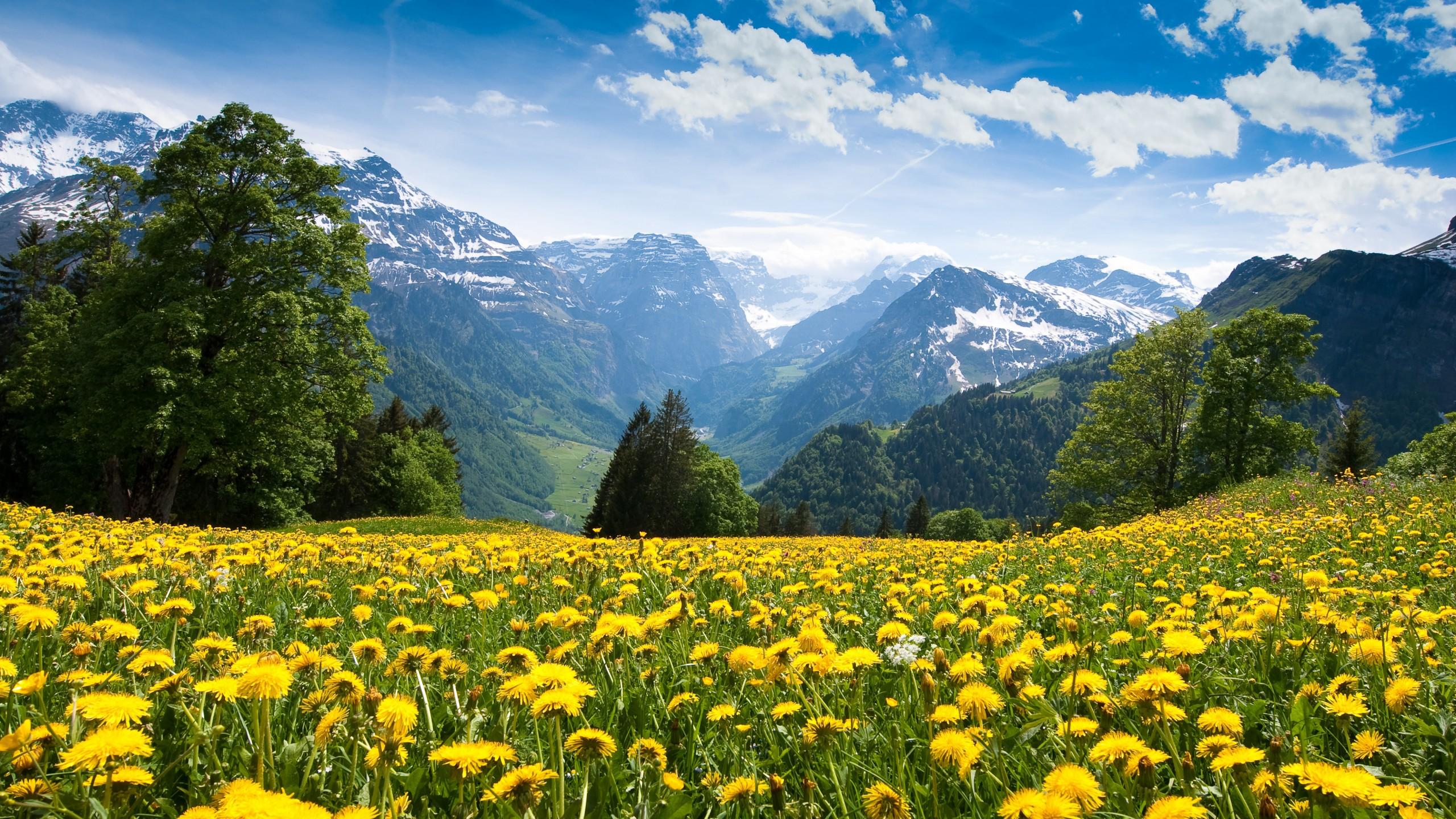 Nature Desktop Background - HD Wallpaper
