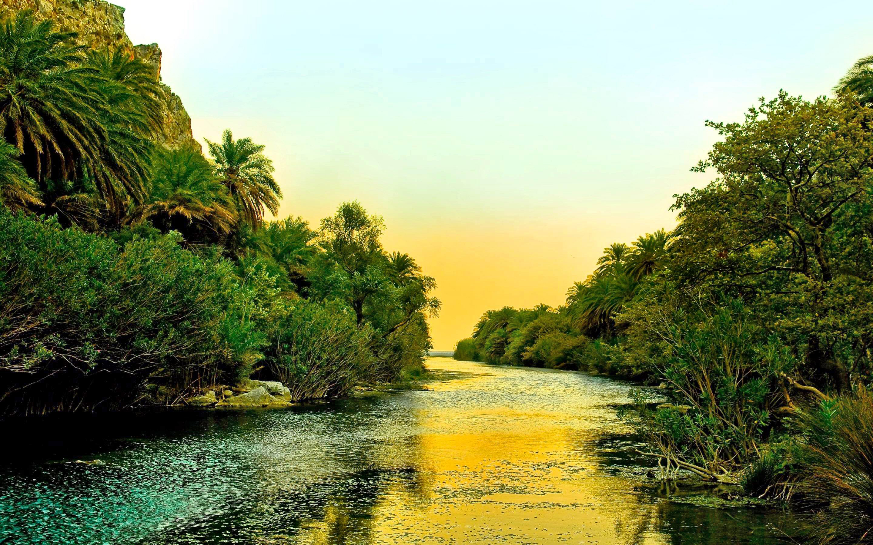 Palm Trees By River - HD Wallpaper