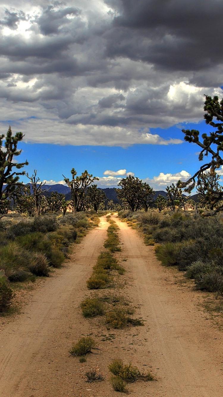Iphone Wallpaper Usa Mojave Joshua Tree National Mojave Desert Wallpaper Iphone 750x1334 Wallpaper Teahub Io