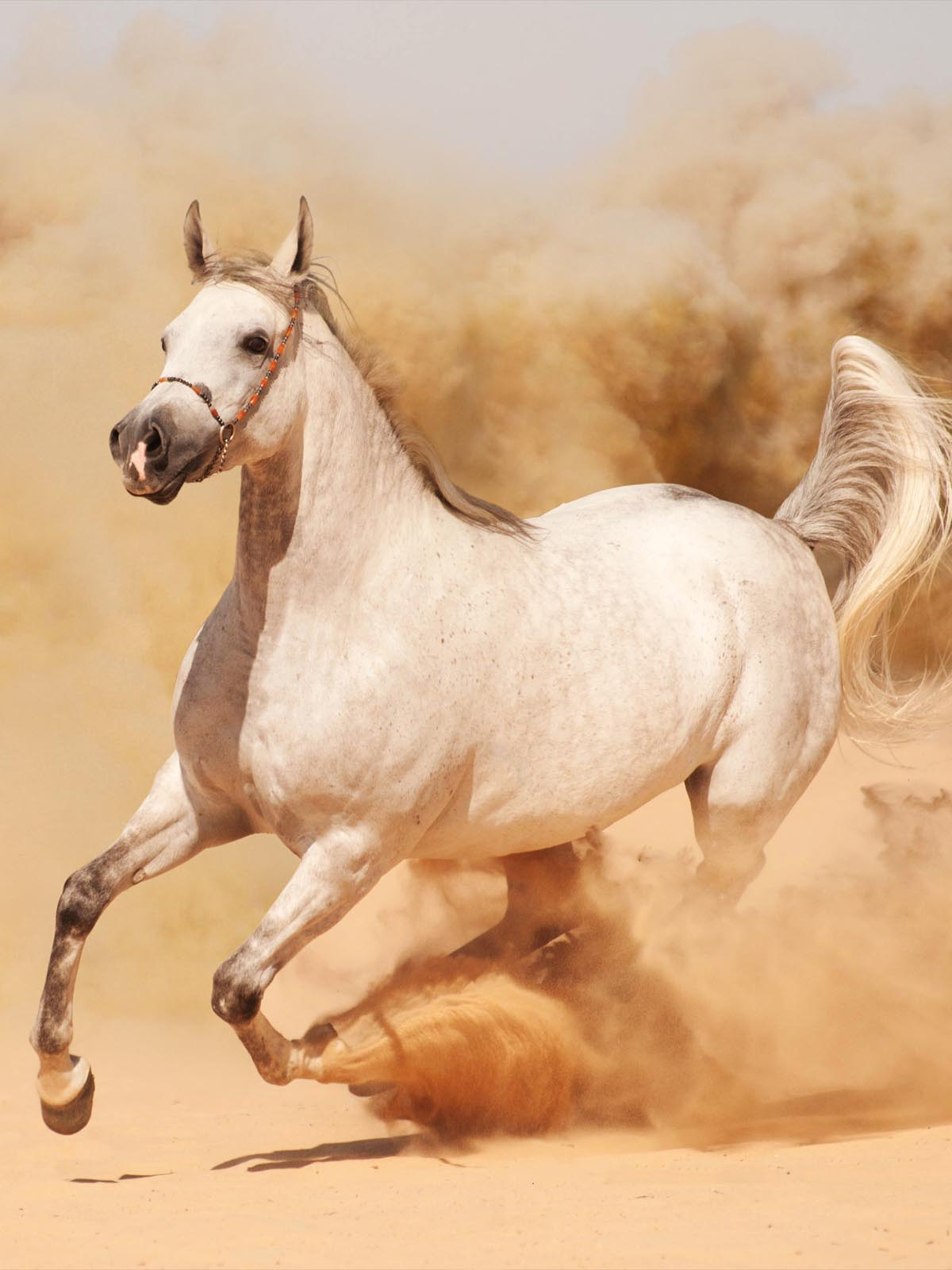 Running Horse Wallpaper Hd For Mobile 1200x1600 Wallpaper Teahub Io