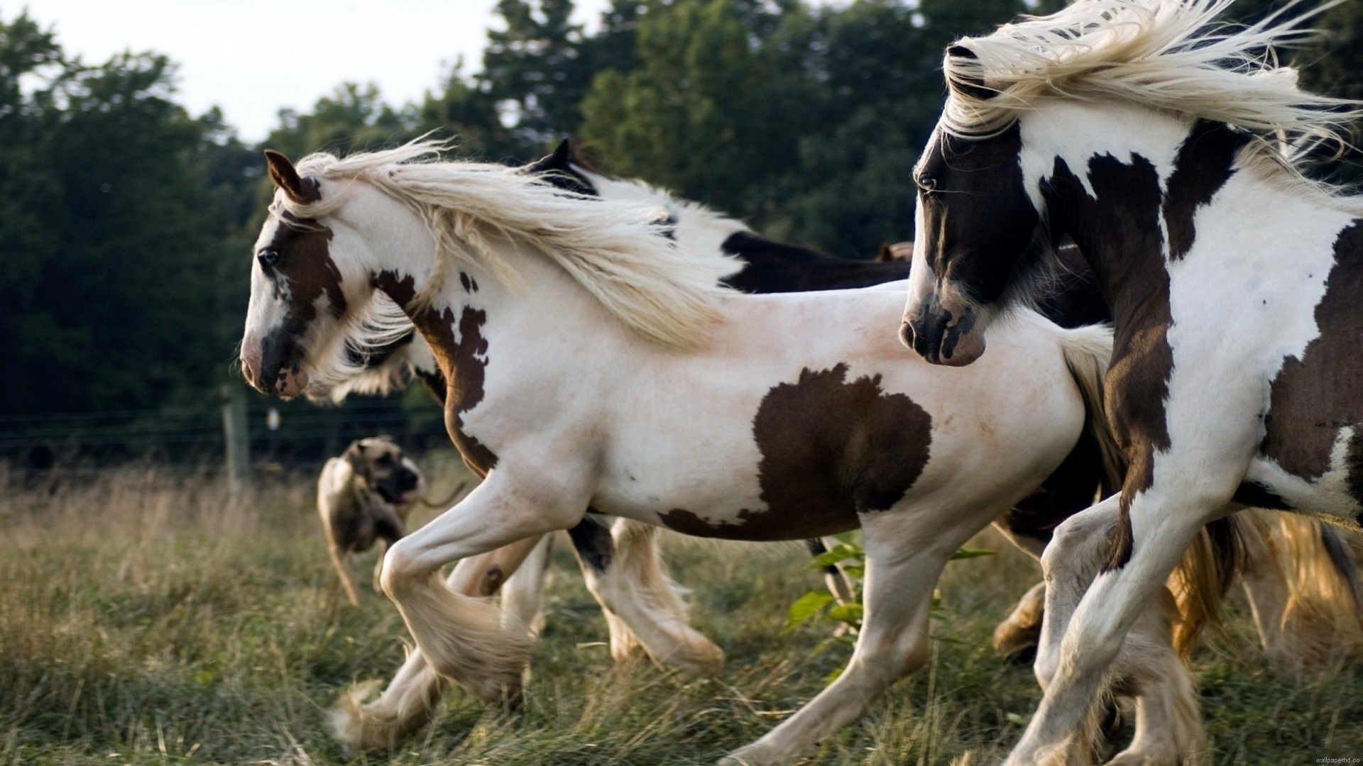 High Resolution Image Of Running Horses 1920x1080 Wallpaper Teahub Io