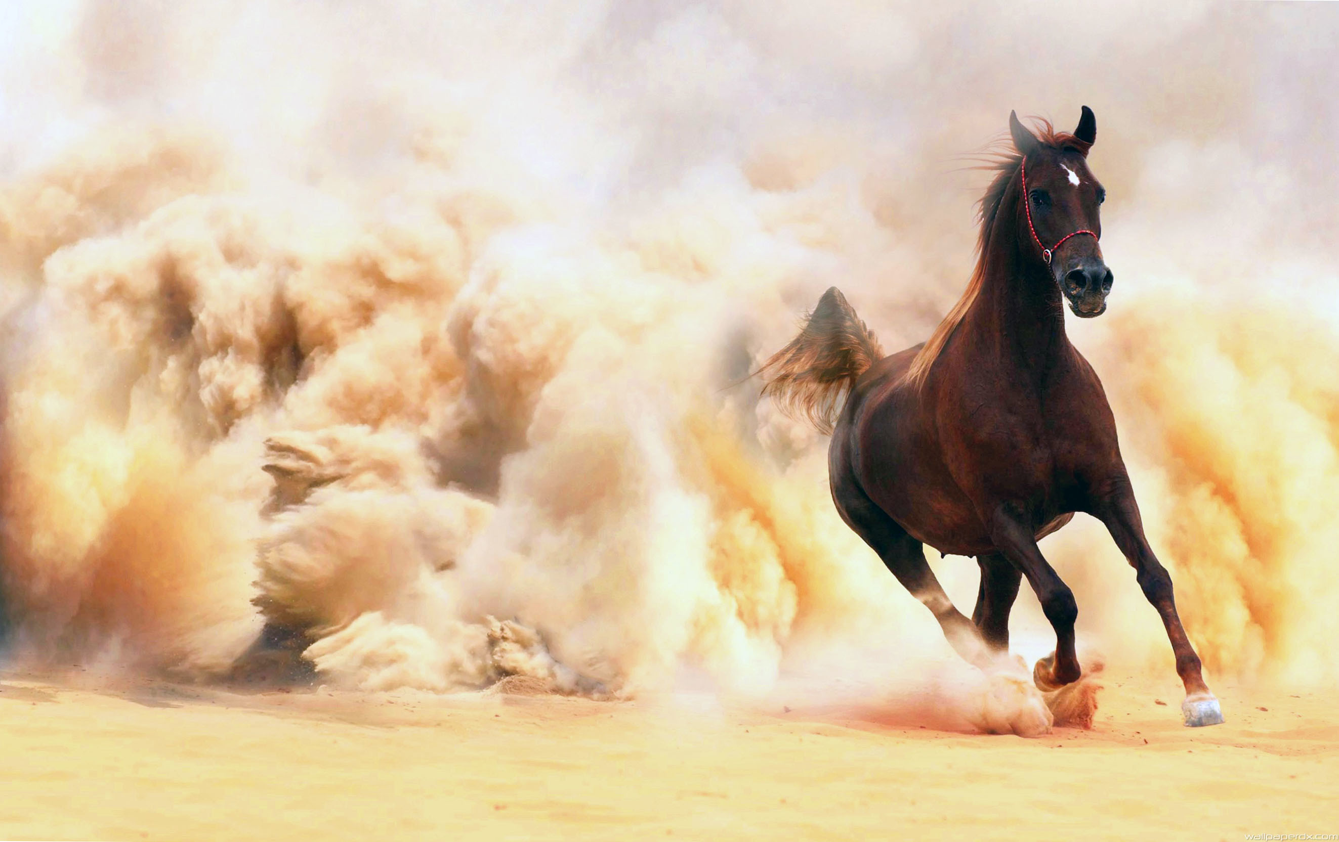 Colors Data Src Arabian Horse Wallpaper For Andro Inspire Thought In Hindi 2646x1665 Wallpaper Teahub Io