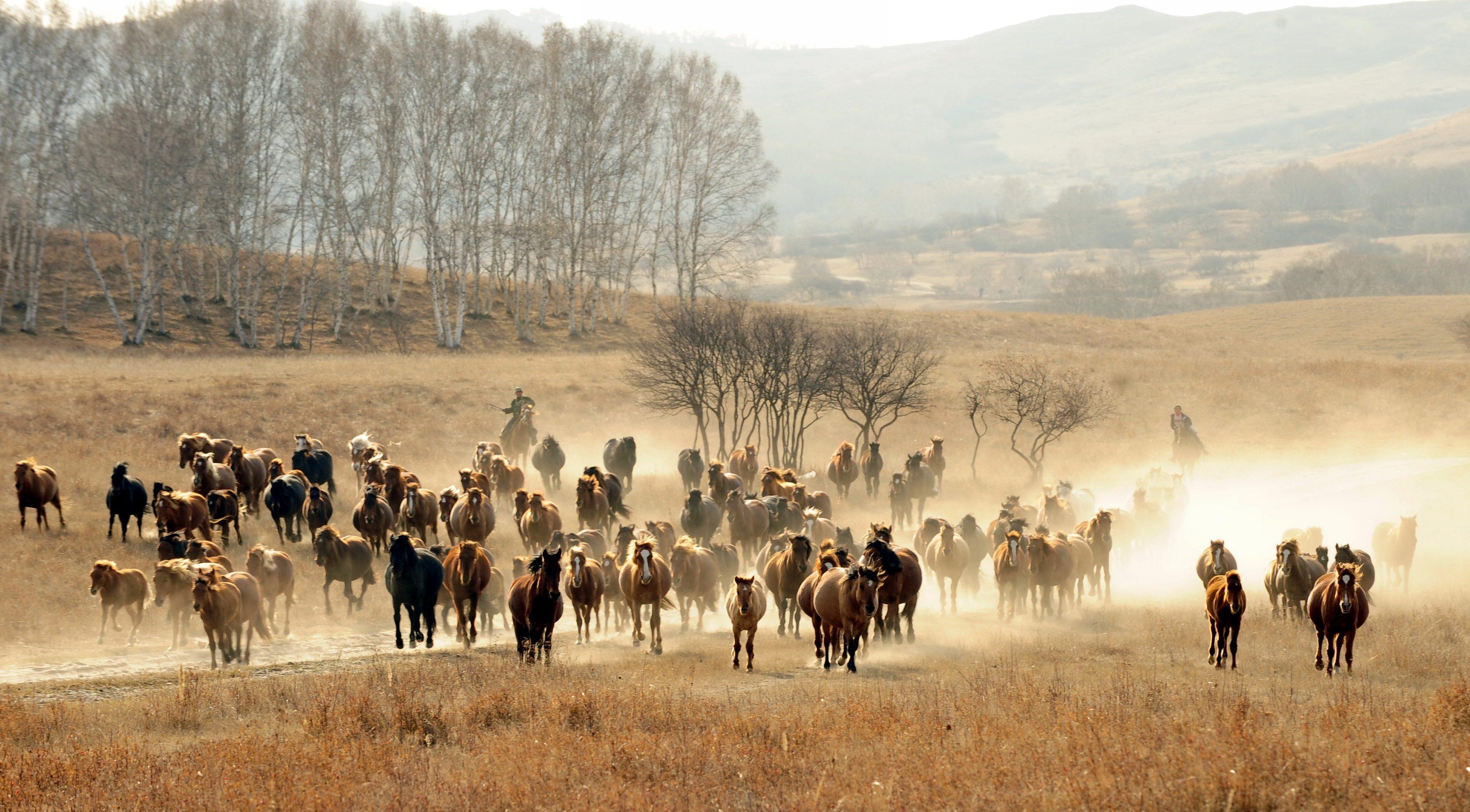 Group Of Wild Horse Running Wallpaper 4k Width 240 Fast Can A Horse Run 3840x2122 Wallpaper Teahub Io