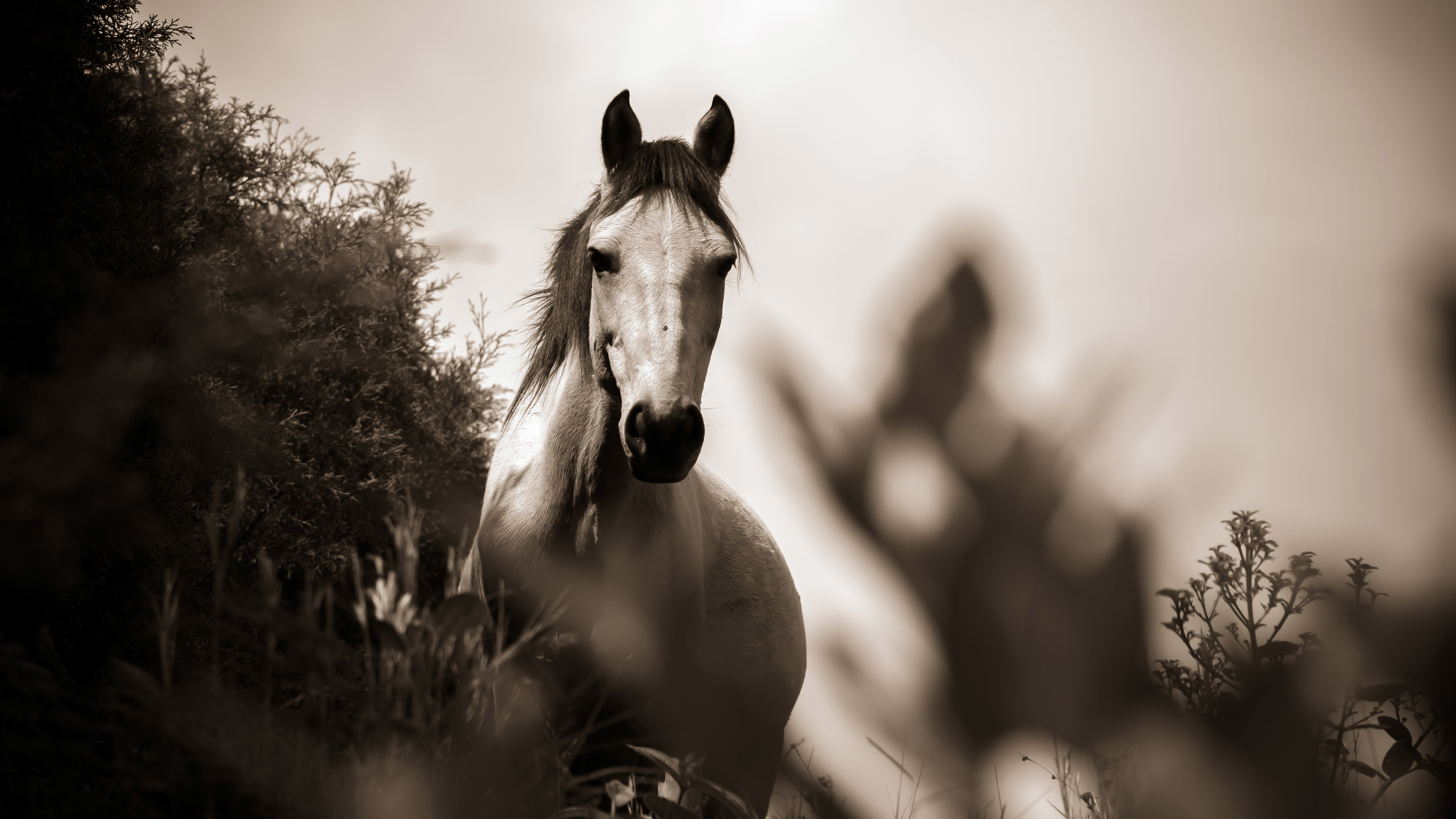 Horse Grayscale Horse Wallpapers For Laptop 3840x2160 Wallpaper Teahub Io