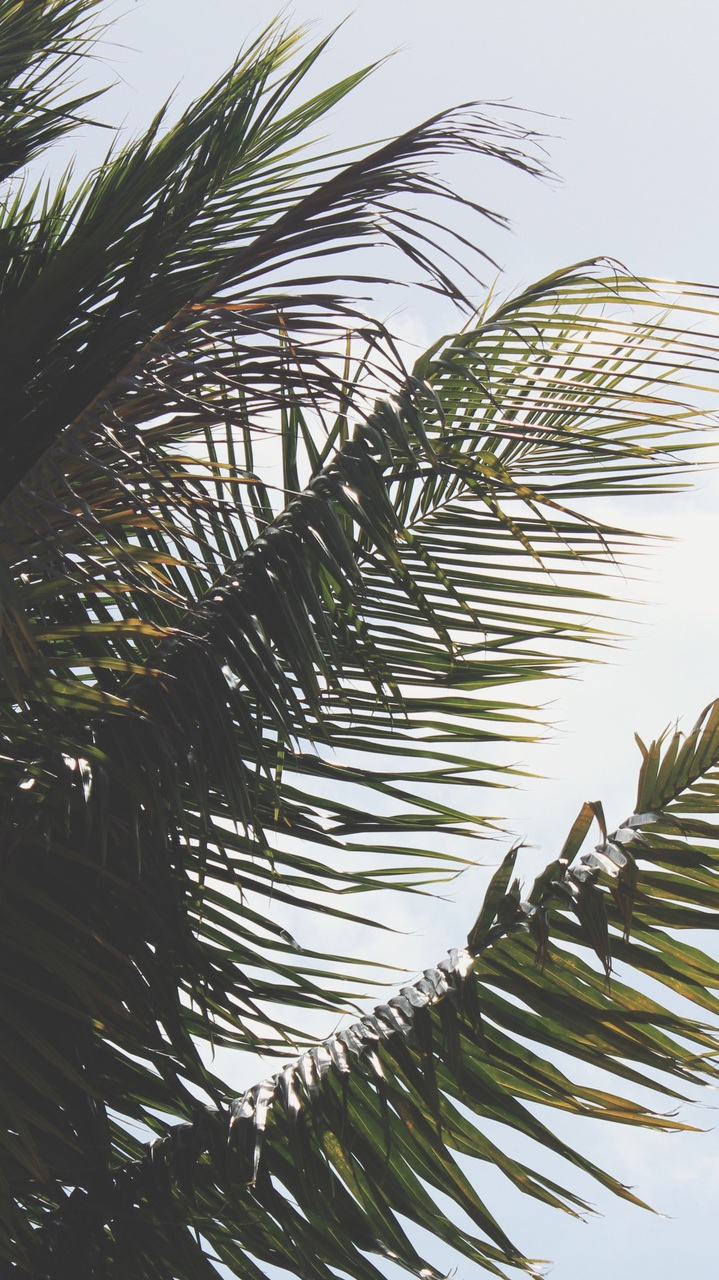 High Definition, Iphone, Iphone Wallpaper - High Resolution Palm Tree Iphone - HD Wallpaper