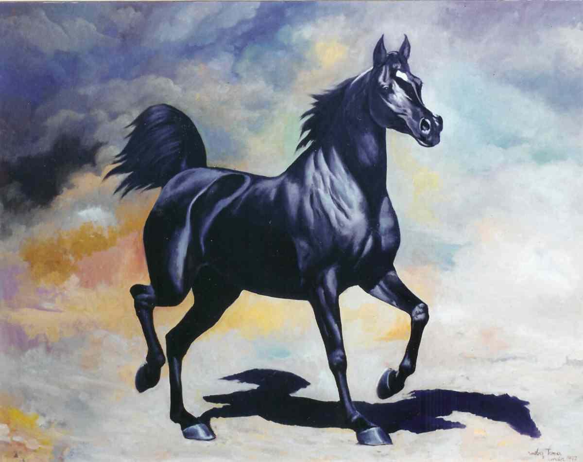 Download Arabian Horses Wallpaper Arab Black Horse Arabian Black Horse Hd 1200x950 Wallpaper Teahub Io