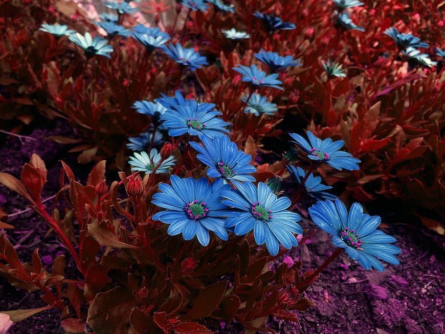 Purple Daisies, Beautiful Flowers, Flowers, Garden, - 4k Wallpapers Flowers Hd - HD Wallpaper