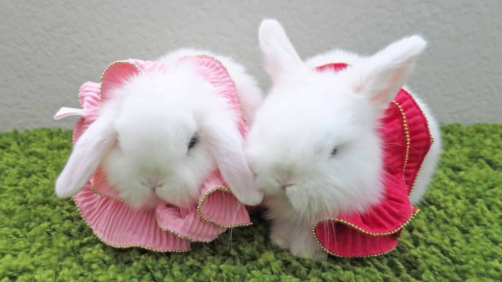Data Src Baby Bunnies Wallpaper For Andro Rabbit In A Dress 1920x1080 Wallpaper Teahub Io