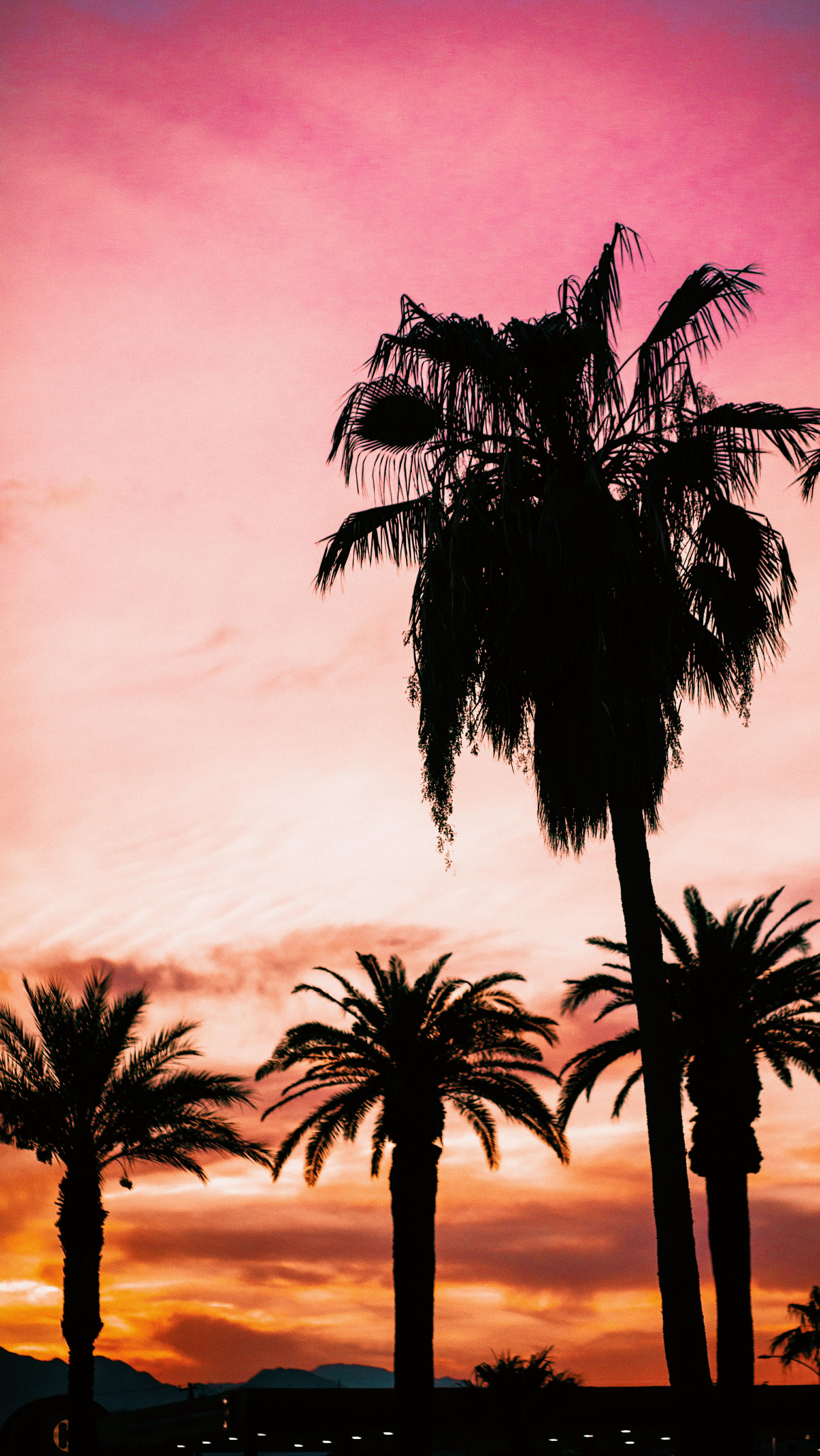 Beautiful Palm Trees Iphone Wallpapers - Poster - HD Wallpaper