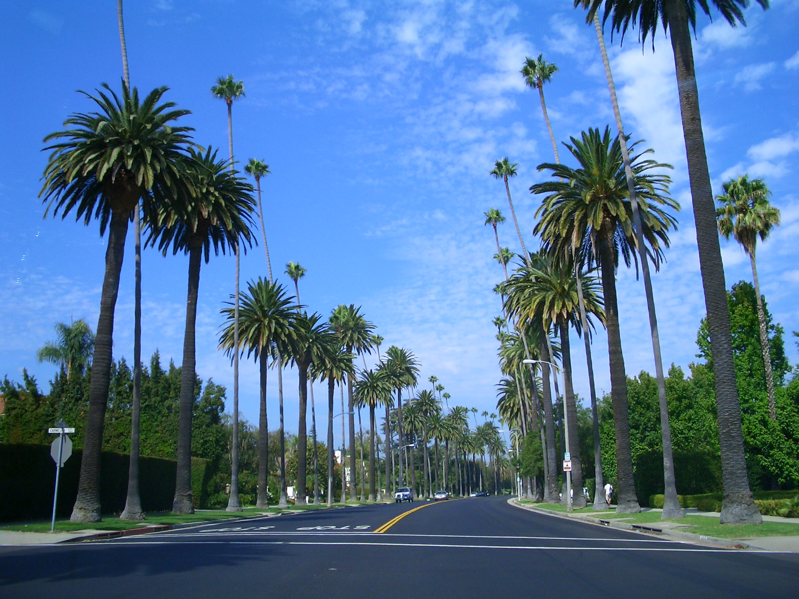 Hipster Palm Tree Wallpaperhd Wallpapers - Beverly Drive Palm Trees - HD Wallpaper