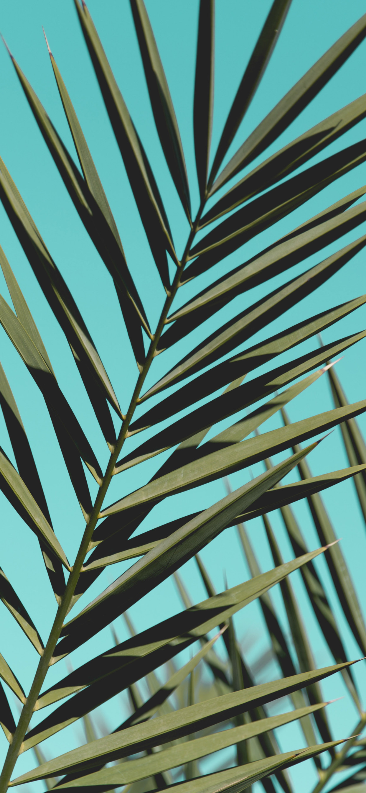 Palm Leaves Sunlight Day Green Iphone Xs - Psalm Trees - HD Wallpaper