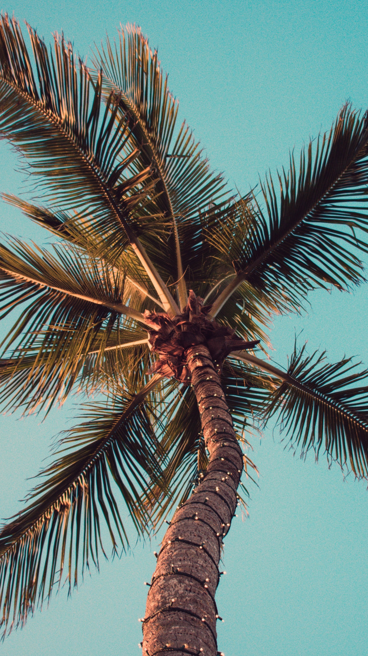 Cool Wallpapers Palm Trees - HD Wallpaper