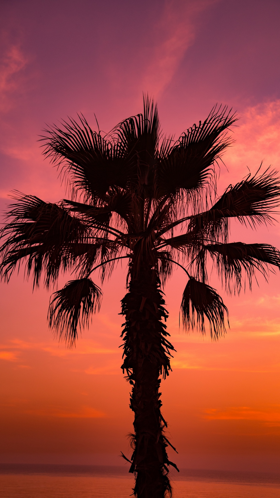 Wallpaper Palm Tree, Sunset, Sky, Branches - Palm Trees And Sunset - HD Wallpaper