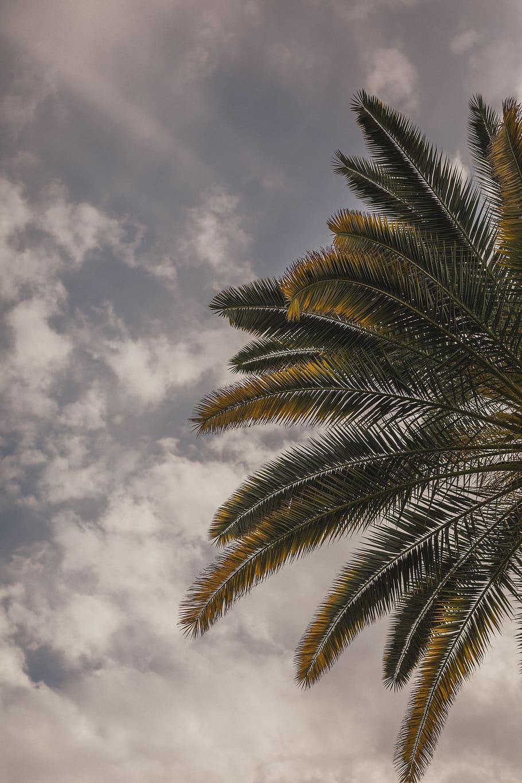 Joshua Tree, Tropical, Palm Springs, Desert, California, - Wallpaper - HD Wallpaper