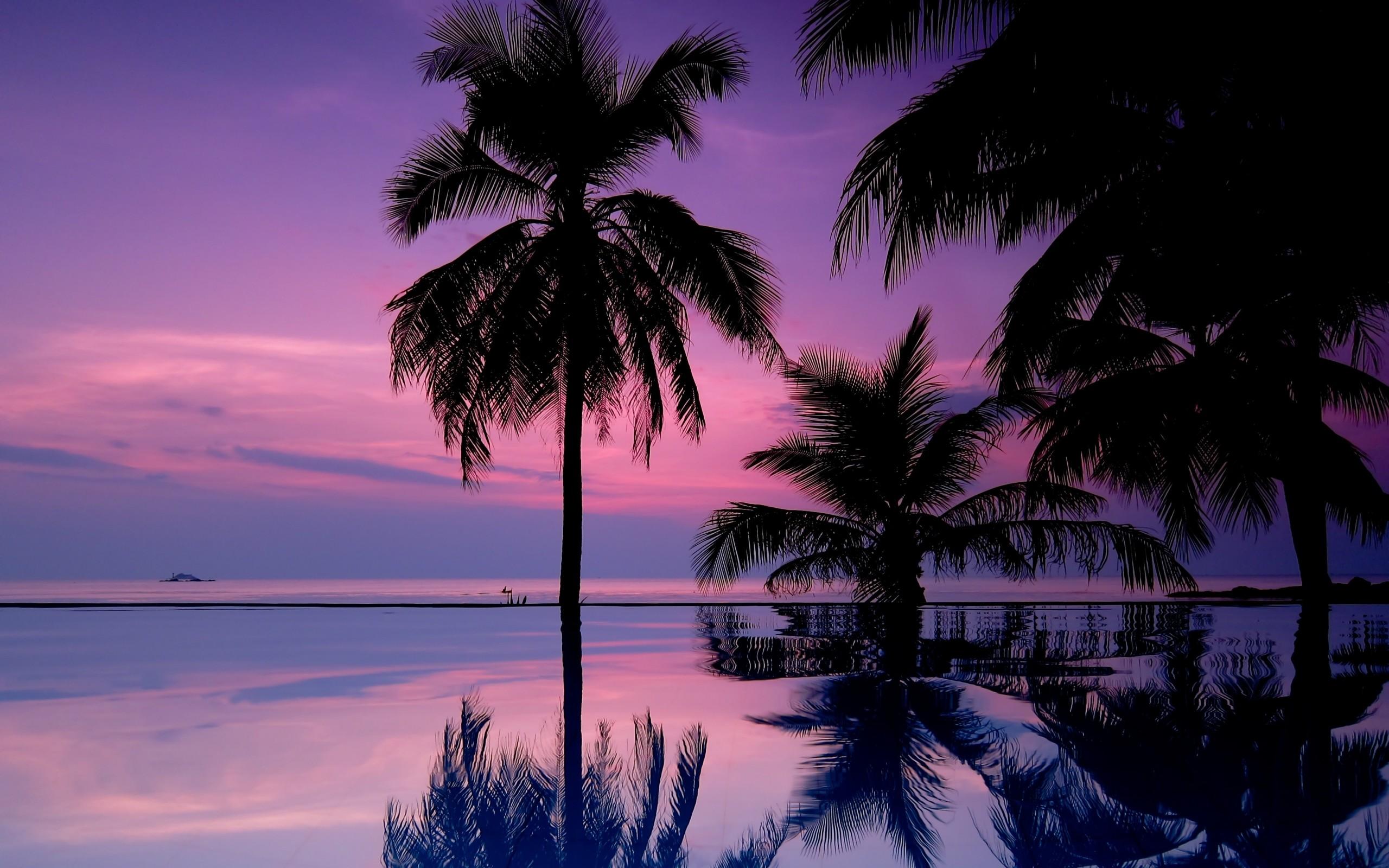 Sunset Palm Trees Iphone Wallpaper   Data-src - Purple Wallpaper Palm Tree - HD Wallpaper