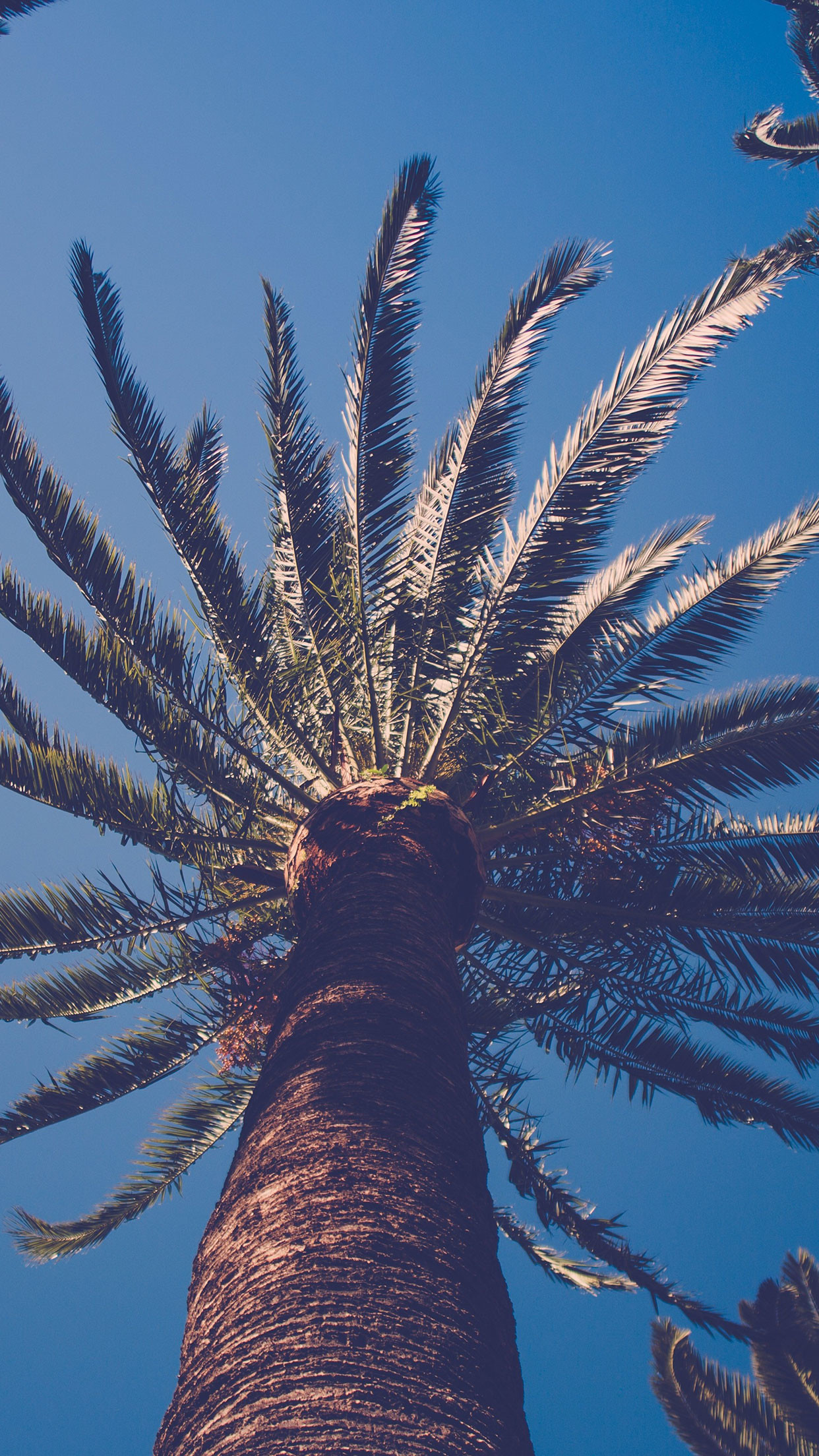Palm Tree Nature Wallpaper - Iphone 8 Wallpapers Palm Tree - HD Wallpaper