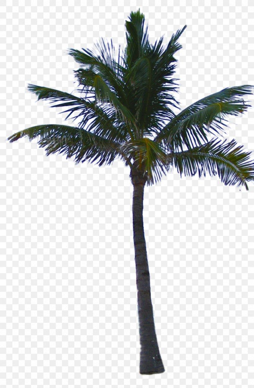 Clip Art Image Mexican Fan Palm Desktop Wallpaper, - Date Palm Trees Png - HD Wallpaper