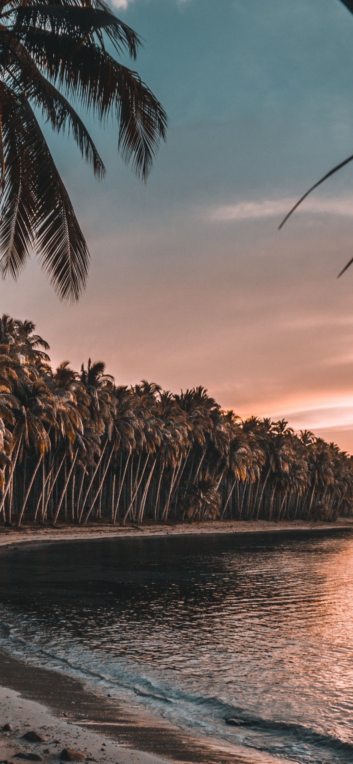 Palm Trees, Holiday, Island, Beach, Sunset - Palm Trees Wallpaper Beach Sunset - HD Wallpaper