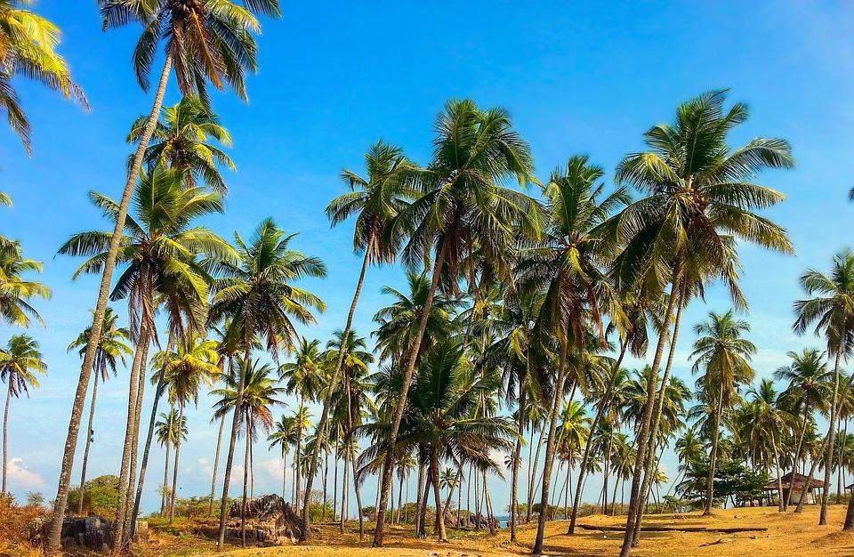 Palm Trees - HD Wallpaper