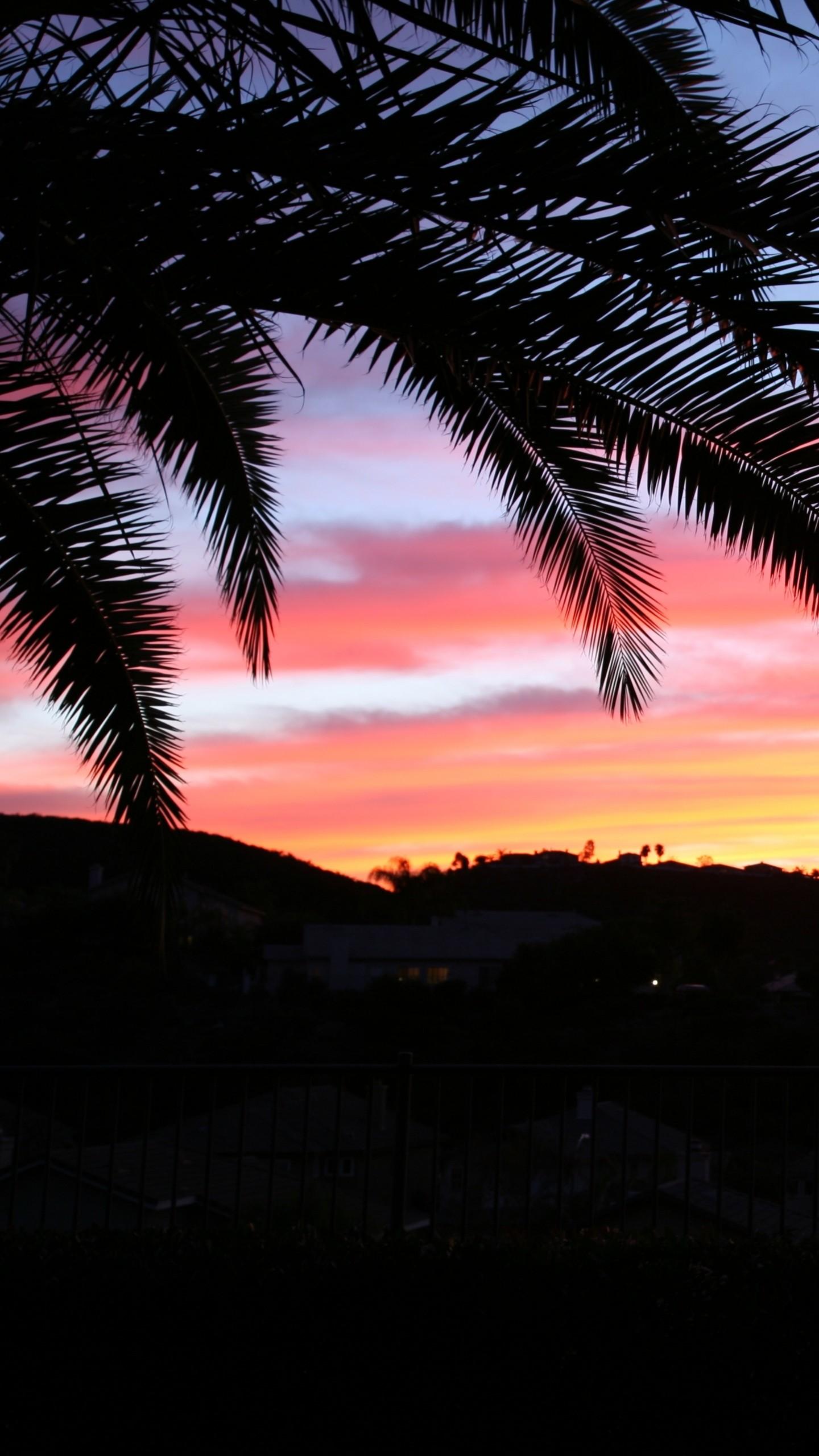 Wallpaper Palm Tree, Sky, Sunset   Data-src - 4k Palm Trees Background - HD Wallpaper