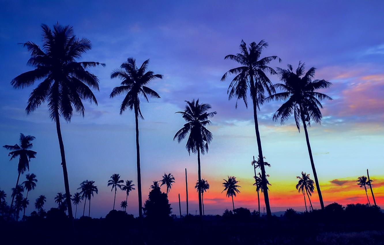Photo Wallpaper Sea, Beach, Summer, Sunset, Palm Trees, - Cocotier Coucher De Soleil - HD Wallpaper
