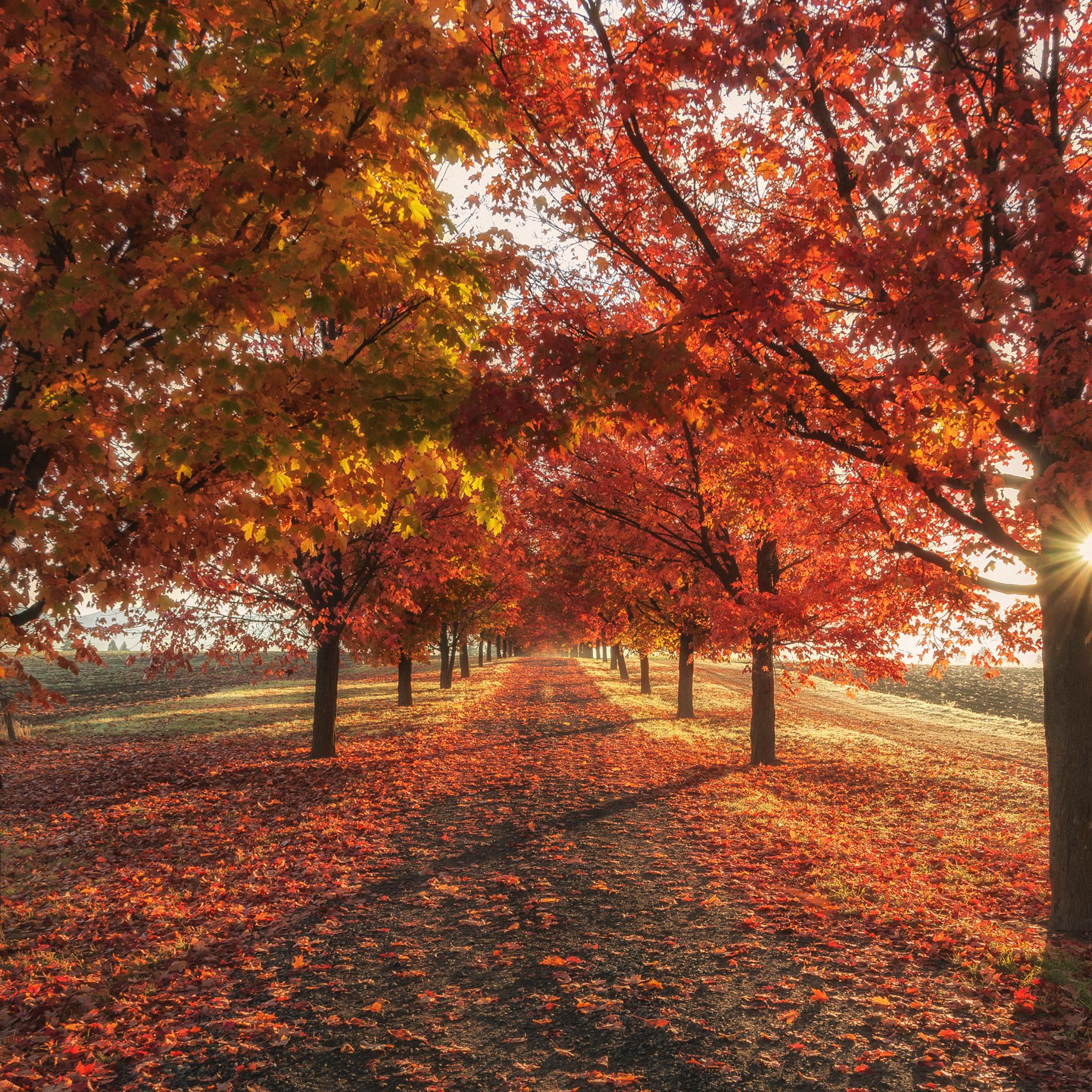 Autumn Iphone Wallpaper 4k 2048x2048 Wallpaper Teahub Io