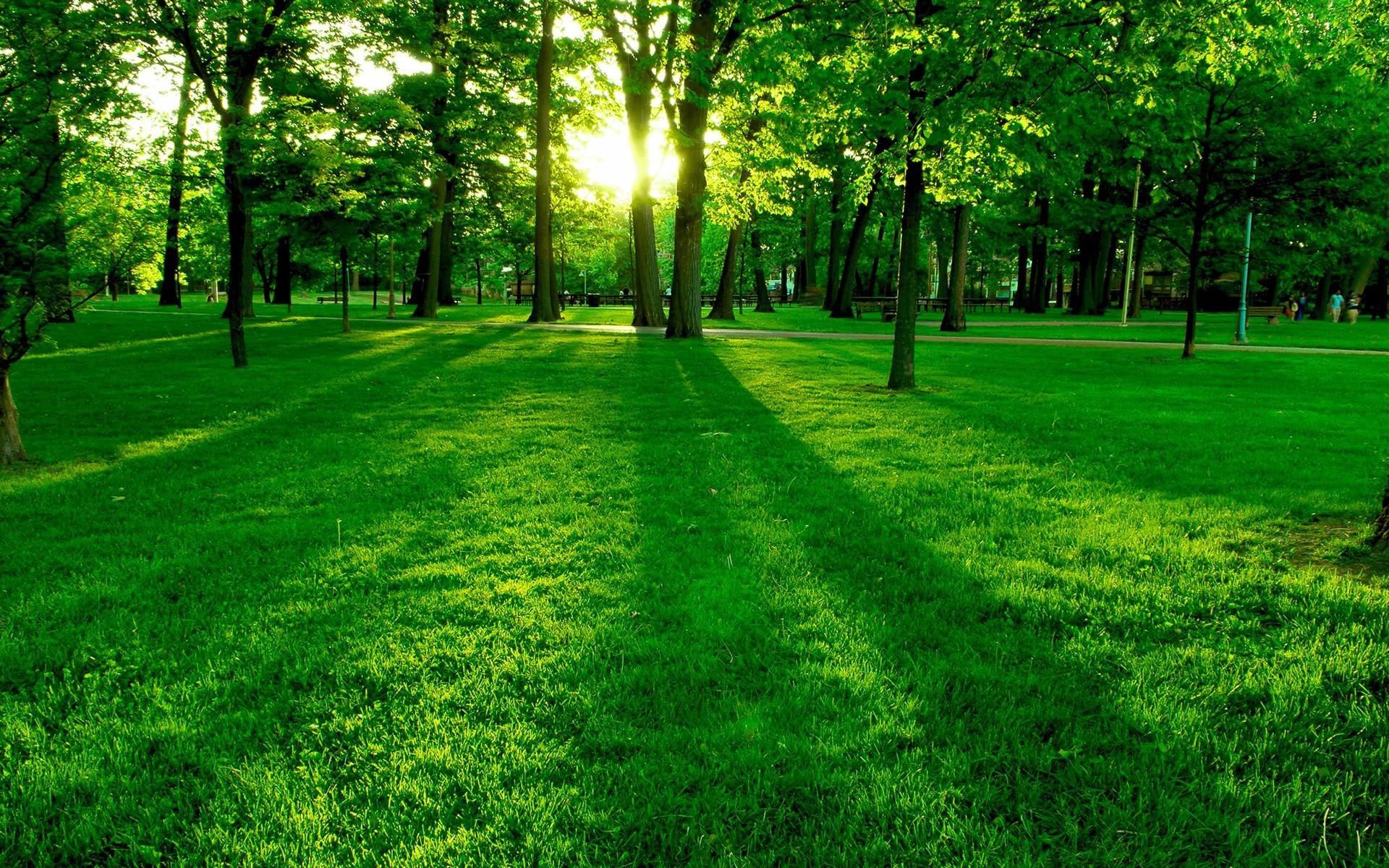 Nature Green Wallpaper Hd Iphone - HD Wallpaper