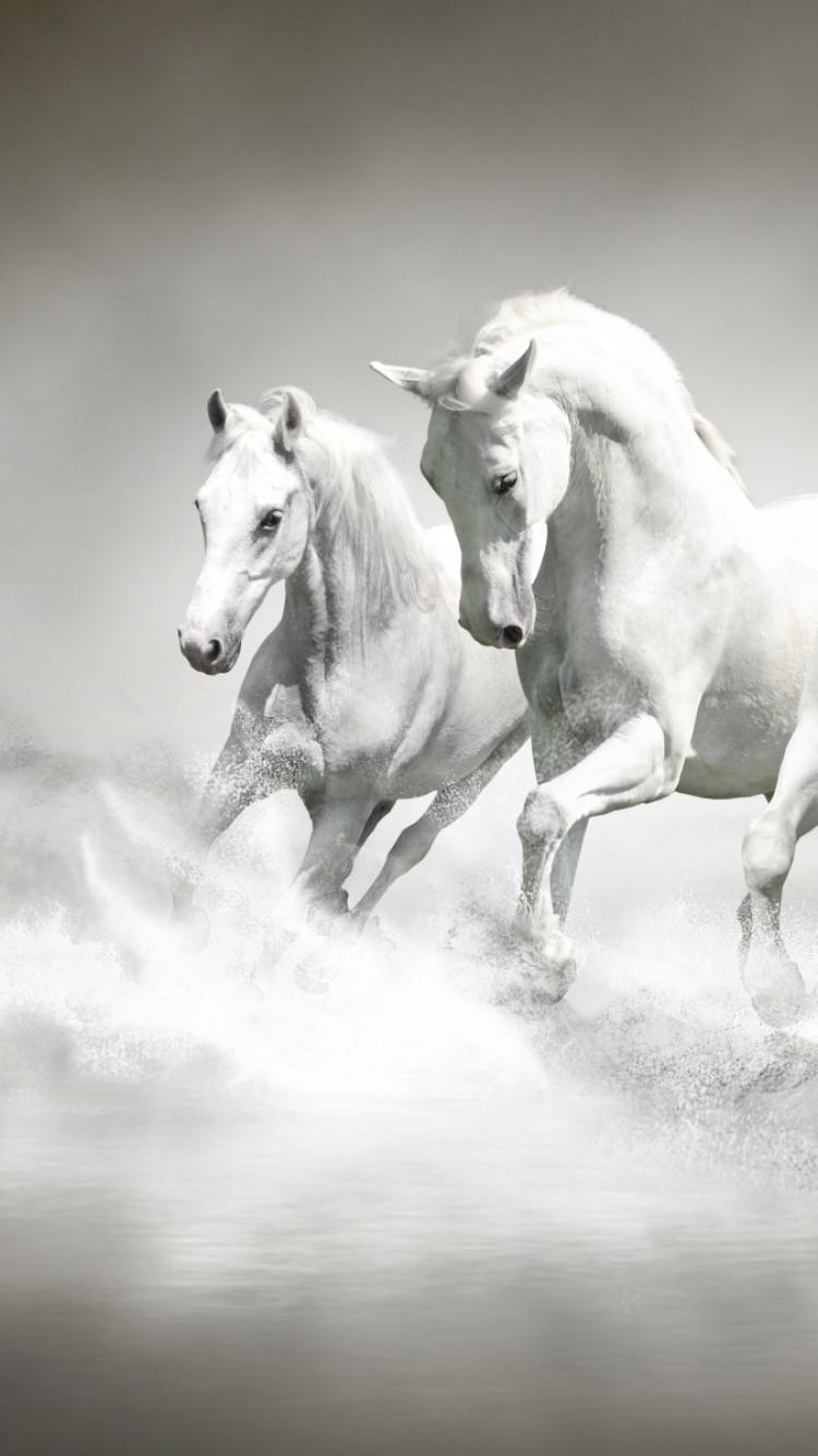 White Horses Majestic Running Water Splash Beach Horse Running Wallpaper Iphone 750x1334 Wallpaper Teahub Io