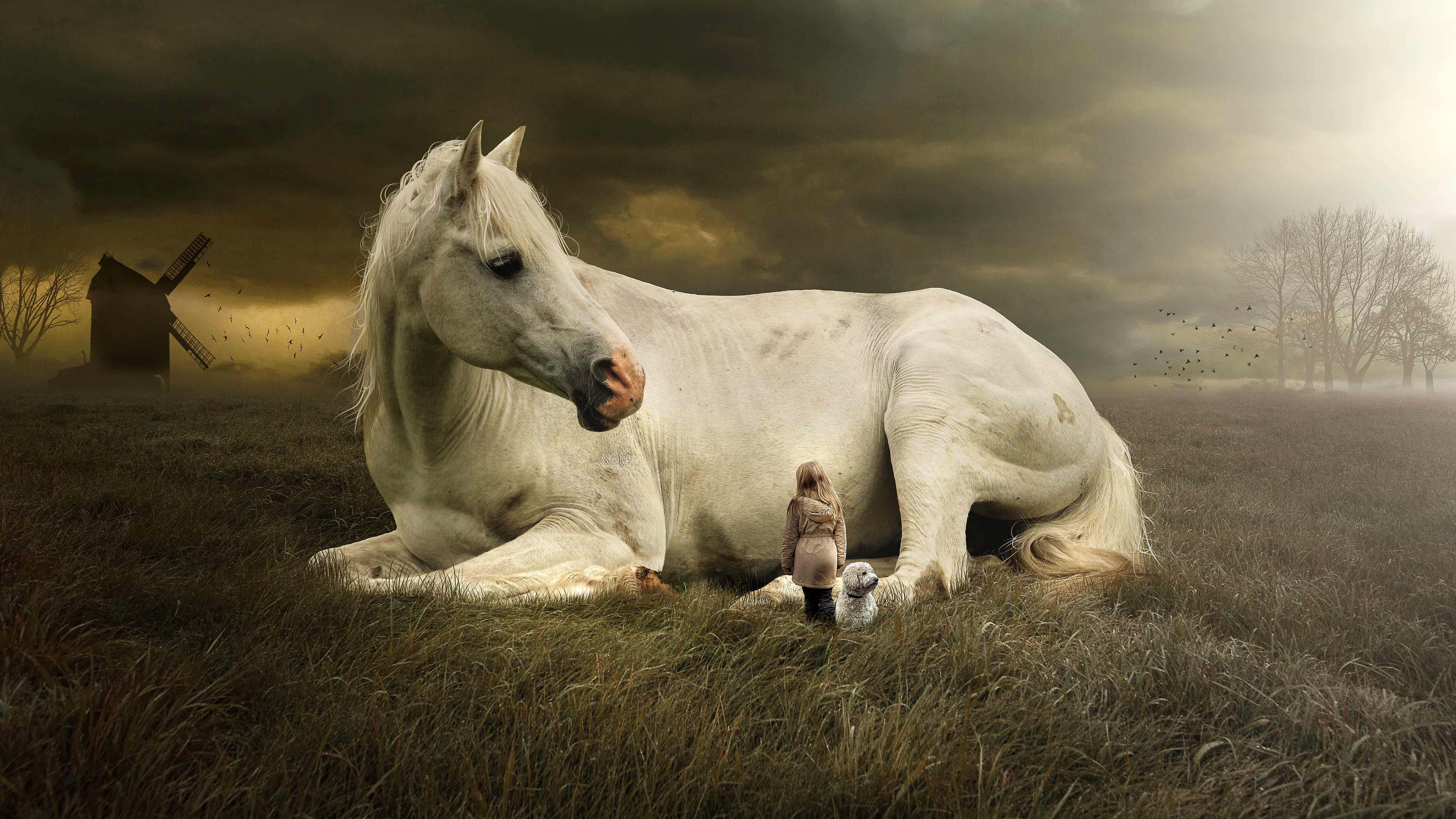 Horse Fantasy 5k Wallpapers White Horse Laying Down 5120x2880 Wallpaper Teahub Io