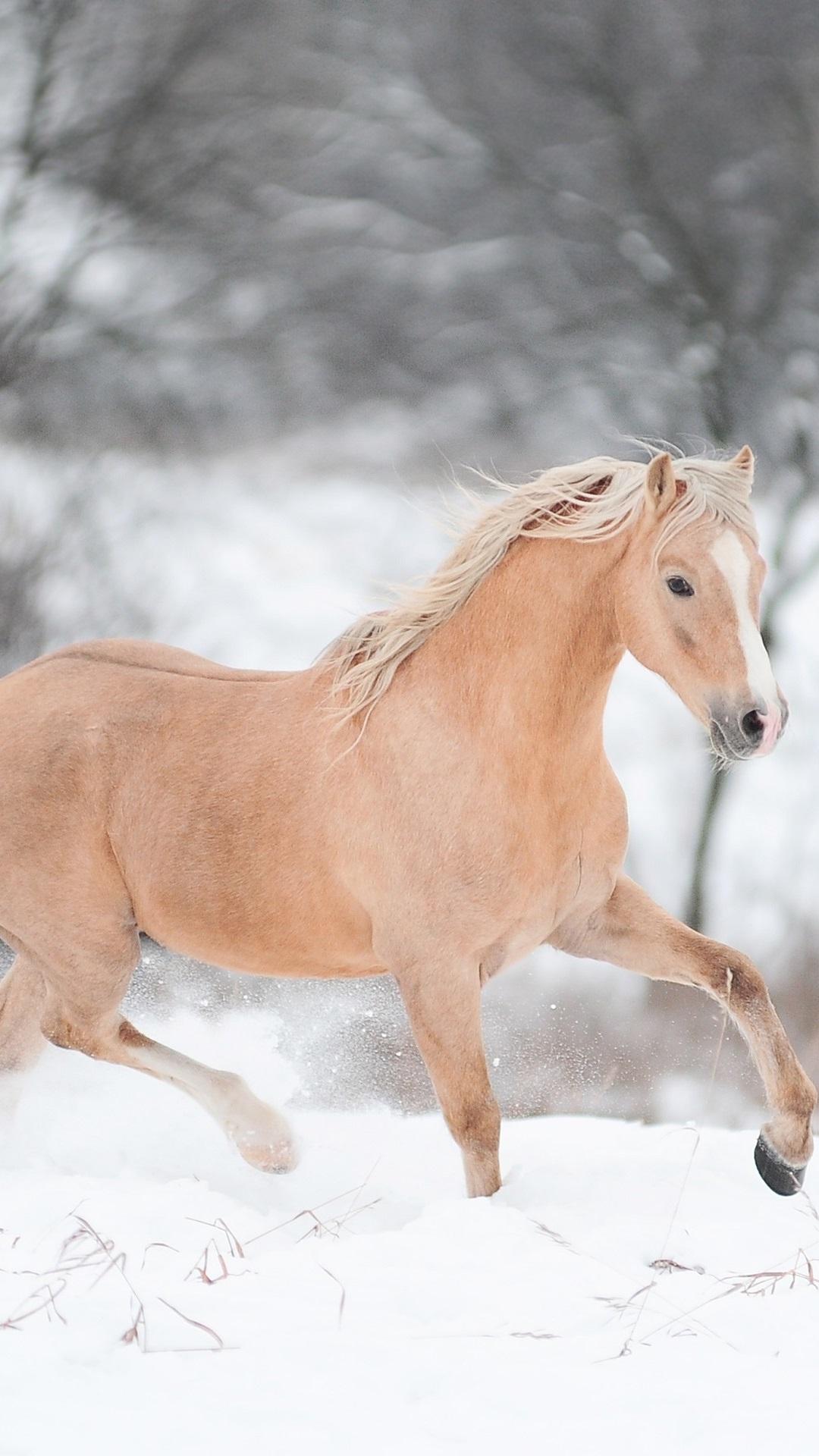 Iphone Wallpaper Horse Running In Winter Caballos Corriendo En La Nieve 1080x1920 Wallpaper Teahub Io