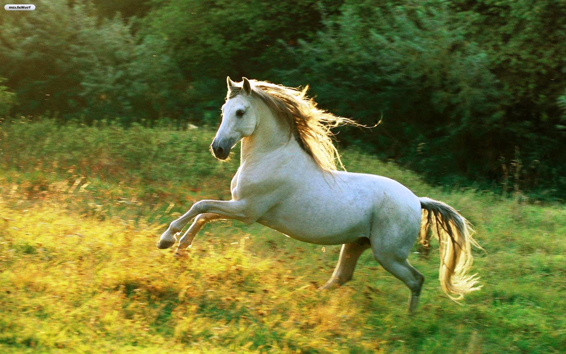 Horse In White Hd 1920x1200 Wallpaper Teahub Io