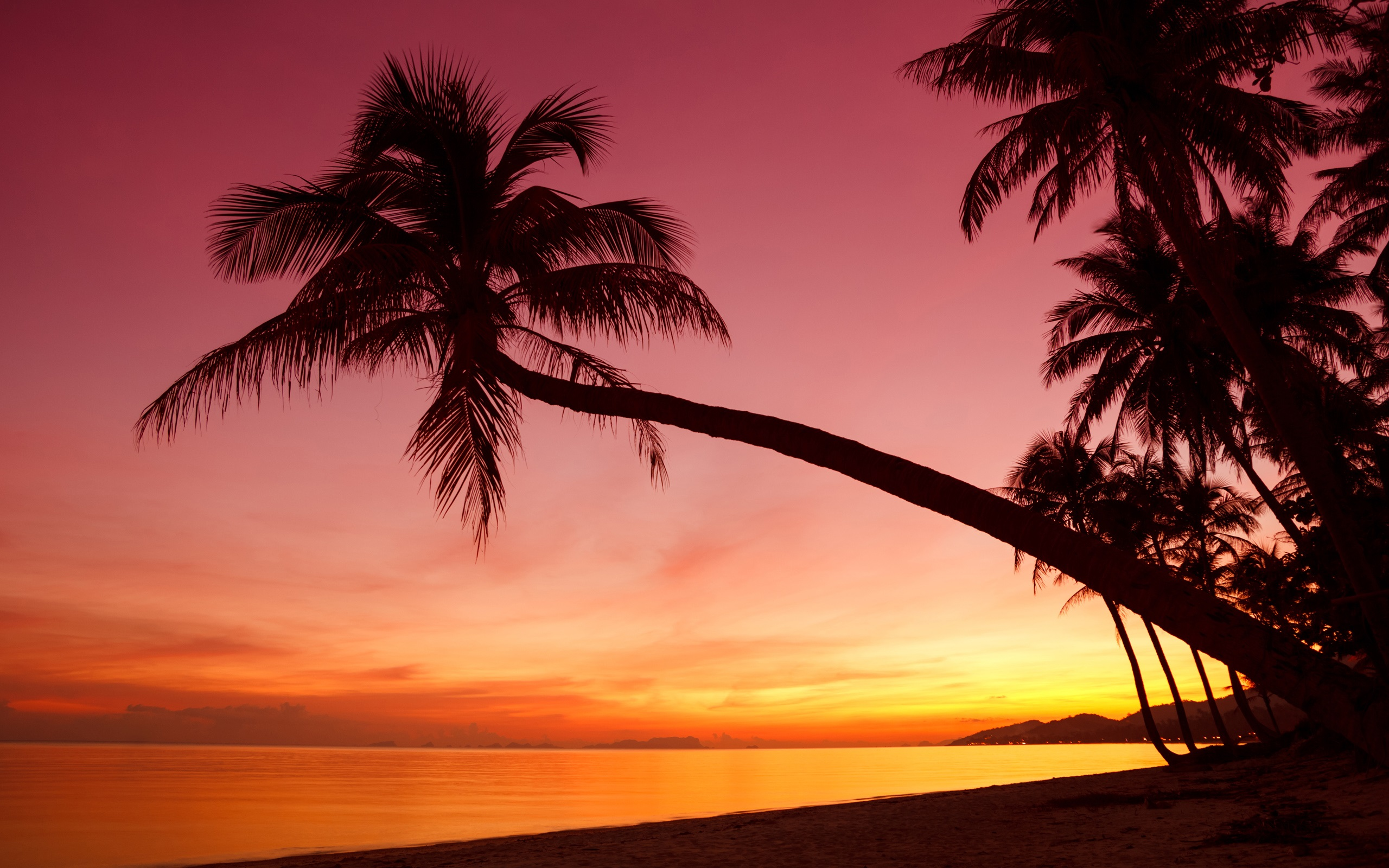 Wallpaper Tropical, Sunset, Palm Trees, Silhouette, - Scene Silhouette Palm Tree - HD Wallpaper