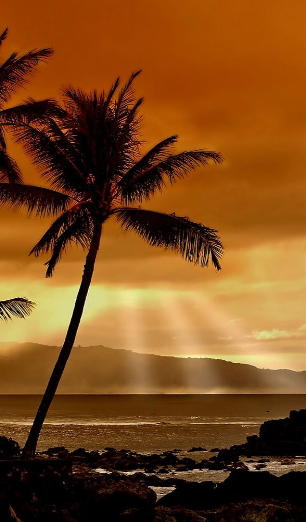 Palm Tree Pictures High Resolution Sunset - HD Wallpaper