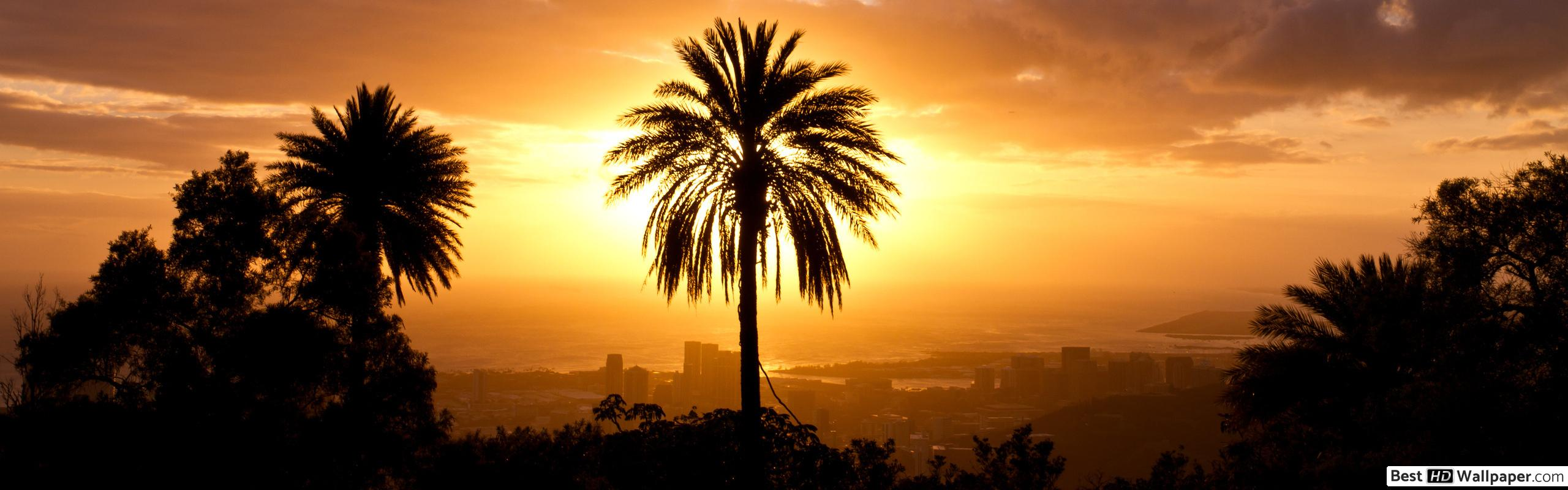 Palm Tree Wallpapers For Macbook Air - HD Wallpaper