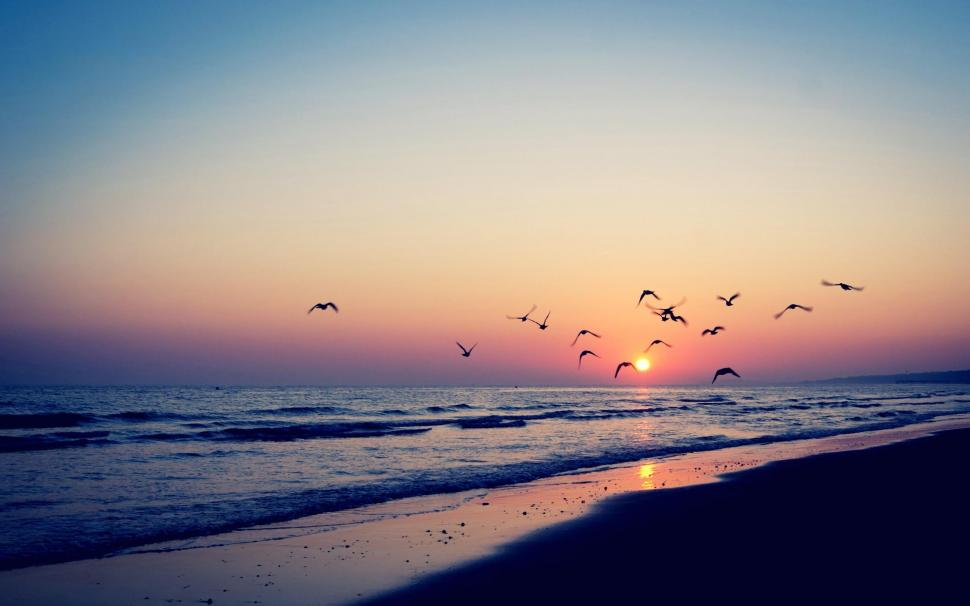 Bird Silhouettes In The Beach Sunset Wallpaper,beaches - High Resolution Beach Sunset - HD Wallpaper