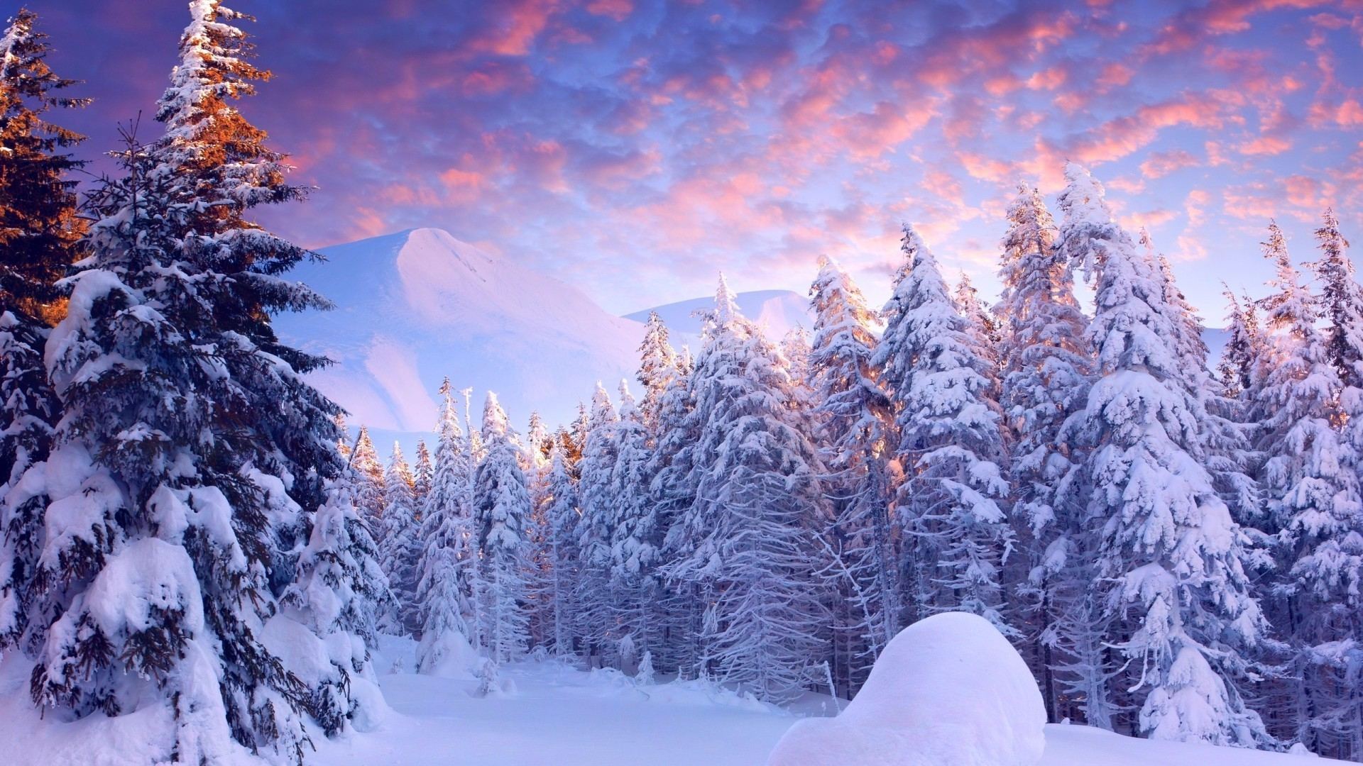 Winter Snow Cold Frost Wood Season Fir Frozen Scenic - Nature Art Landscape Canvas Art Paintings Oil - HD Wallpaper