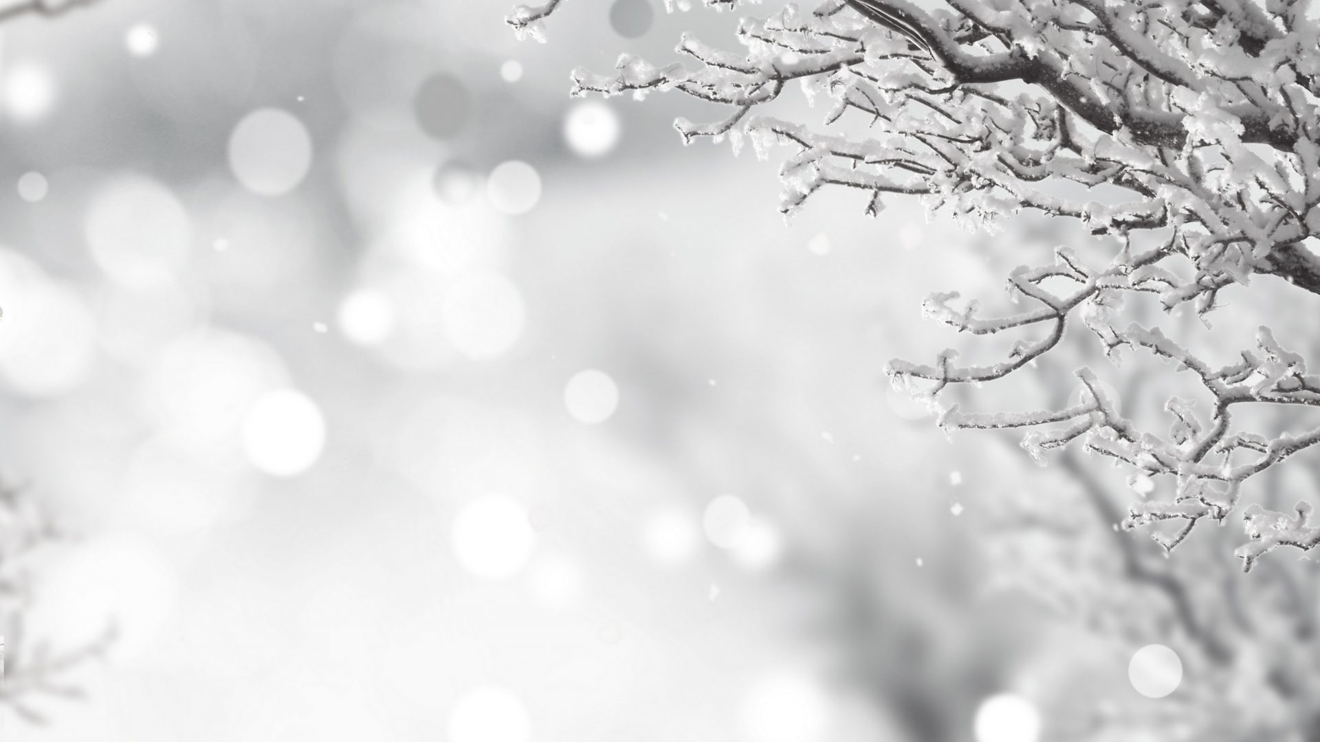 322 3221053 free desktop wallpaper winter holiday black and white