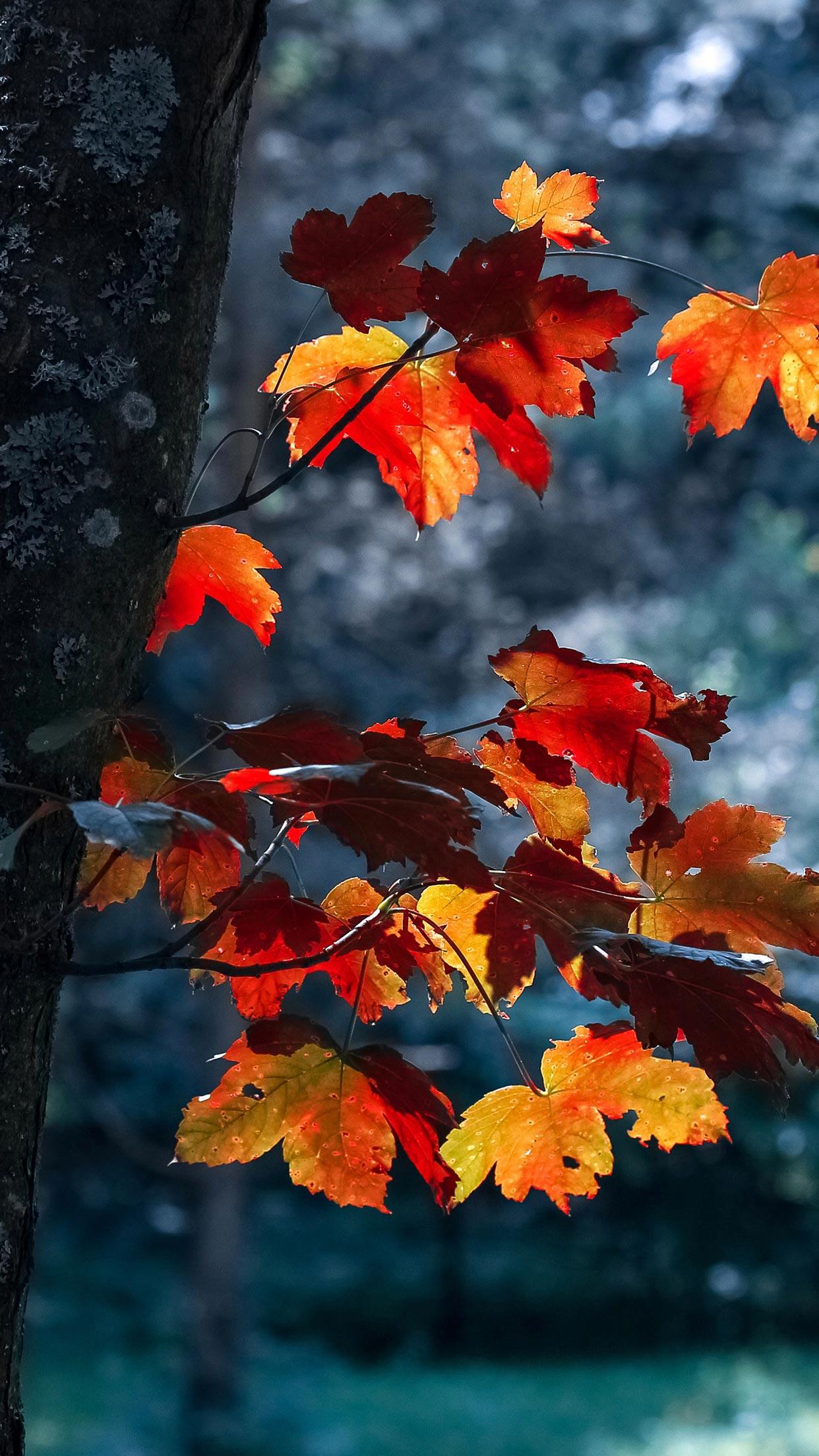 Girly Autumn Wallpaper 15 Fall Iphone Xs Wallpapers 1242x2208 Wallpaper Teahub Io