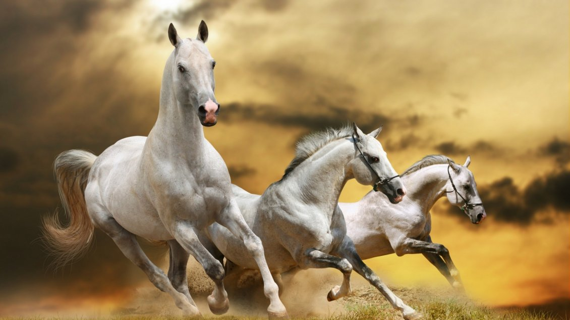 Download Wallpaper Three Beautiful White Horses Running 1130x635 Wallpaper Teahub Io