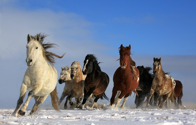 Photo Wallpaper Sky Animals Nature Freedom Snow Wild Wallpaper Horse 1332x850 Wallpaper Teahub Io