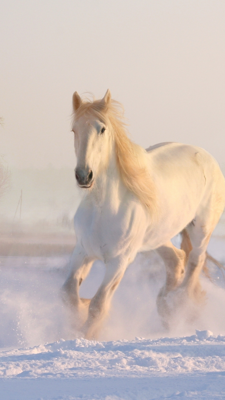 White Horse Run Animal Wallpaper Beautiful White Wild Horses 750x1334 Wallpaper Teahub Io