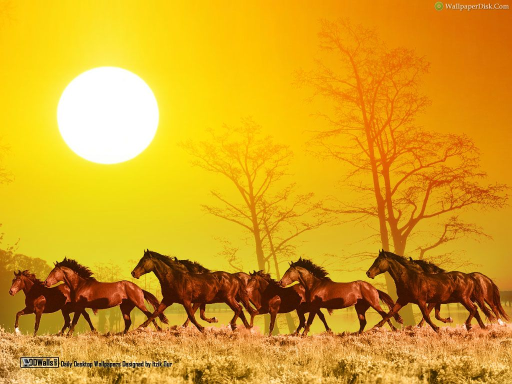 Free Cute 7 Running Horses Images On Your Tablet Pc 7 Horse Running Photo Hd 1024x768 Wallpaper Teahub Io