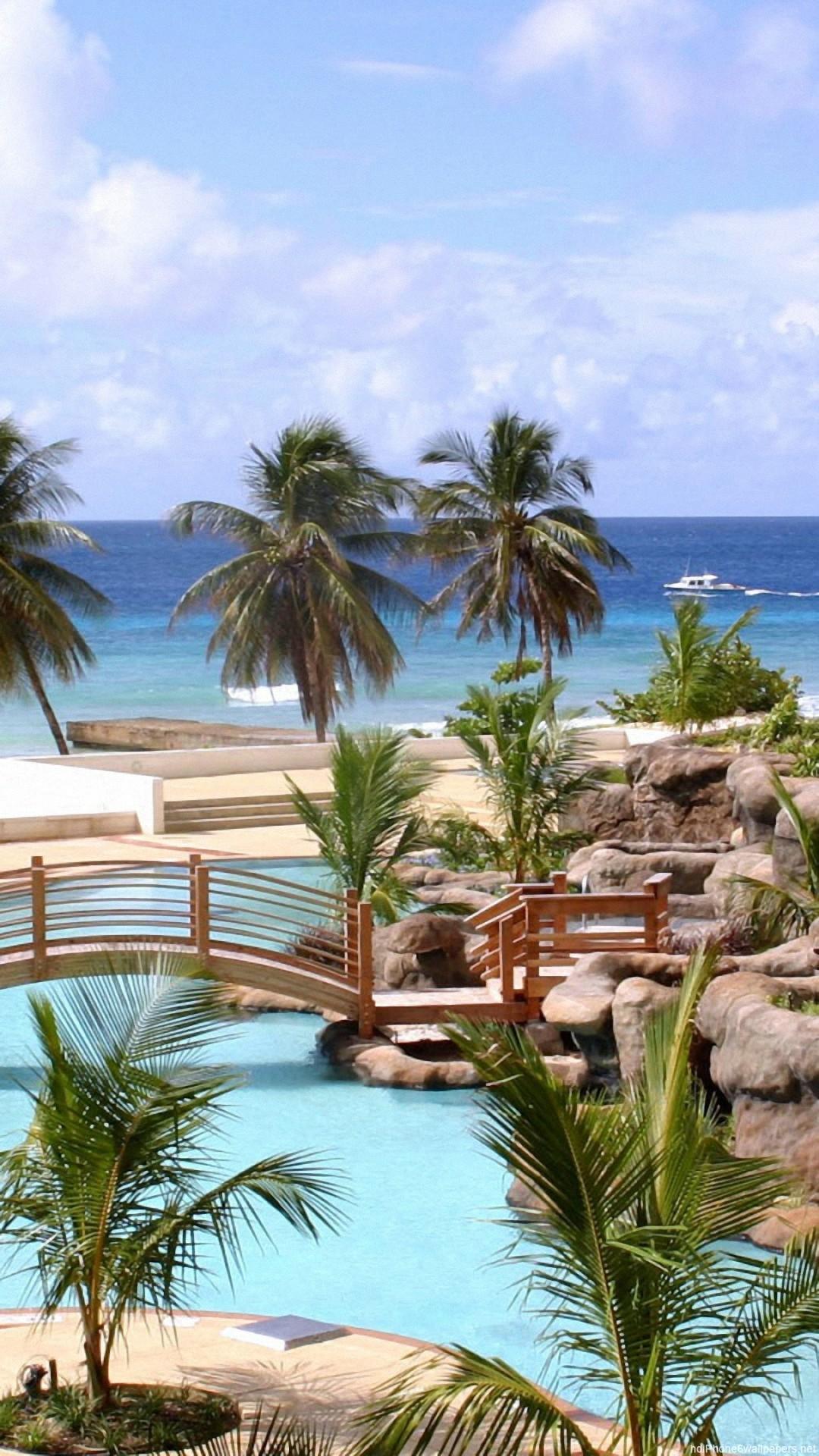 Beautiful Tree Summer Palm Tropical Iphone 6 Wallpapers - Hilton Barbados - HD Wallpaper