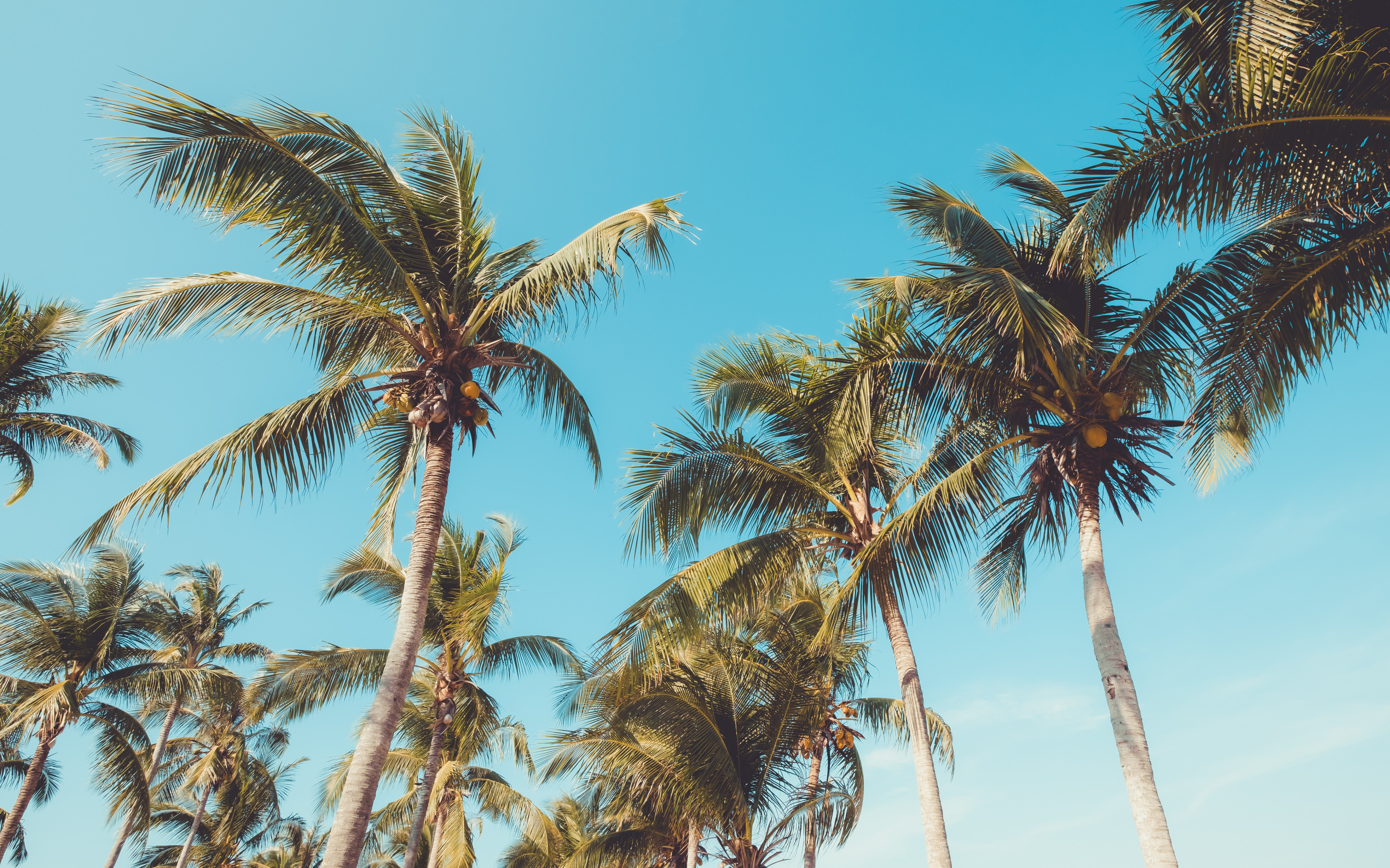 Tropical Island, Palm Trees, Coconuts, Blue Clear Sky, - High Resolution Coconut Tree - HD Wallpaper